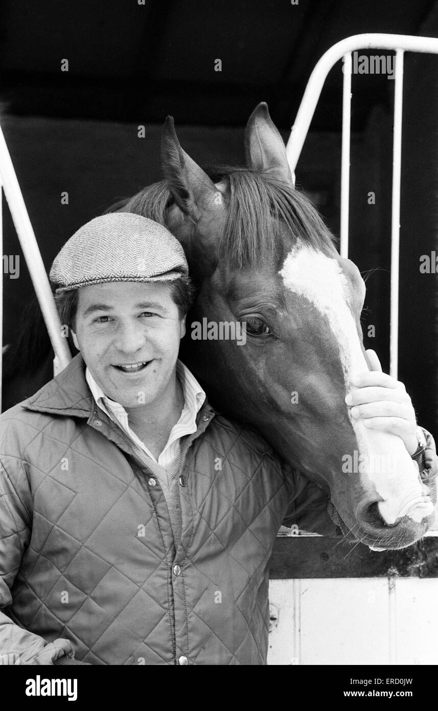 Derby winning racehorse Shergar at stables. 6th June 1981. - Stock Image