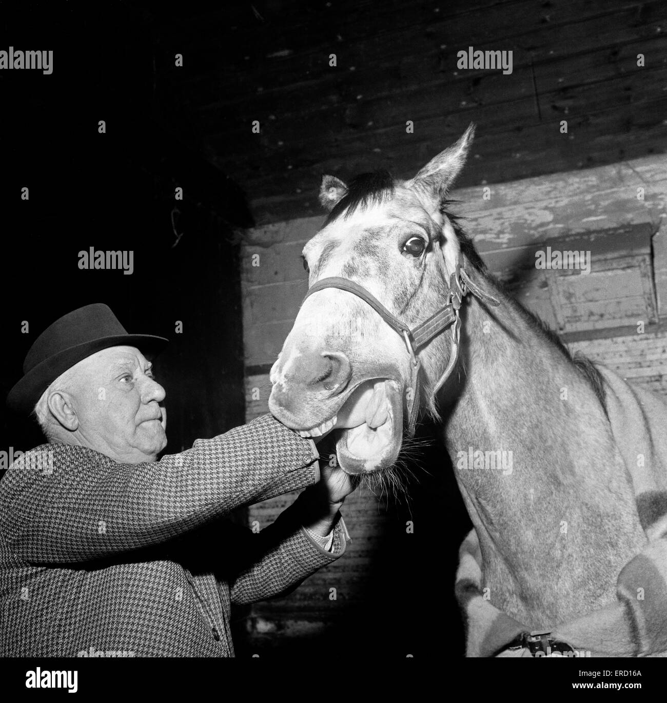 Pictures takes at stables at Newmarket, behind the scenes. Horse dentist Archie Humble.  3rd March 1964. - Stock Image