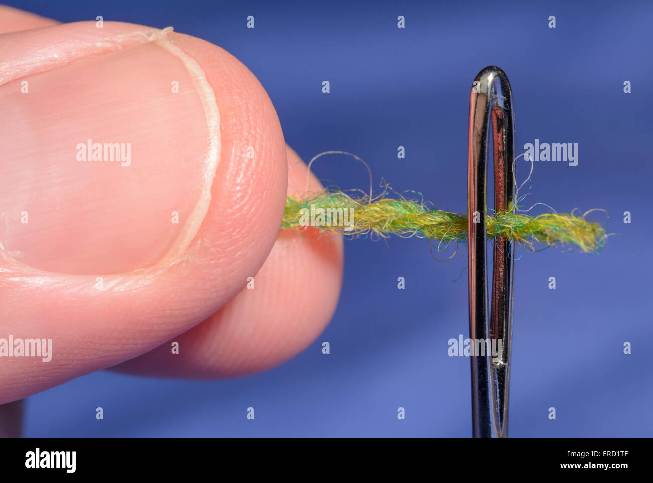 Threading a needle. Closeup of a man's fingers threading through the eye of a darning needle. - Stock Image