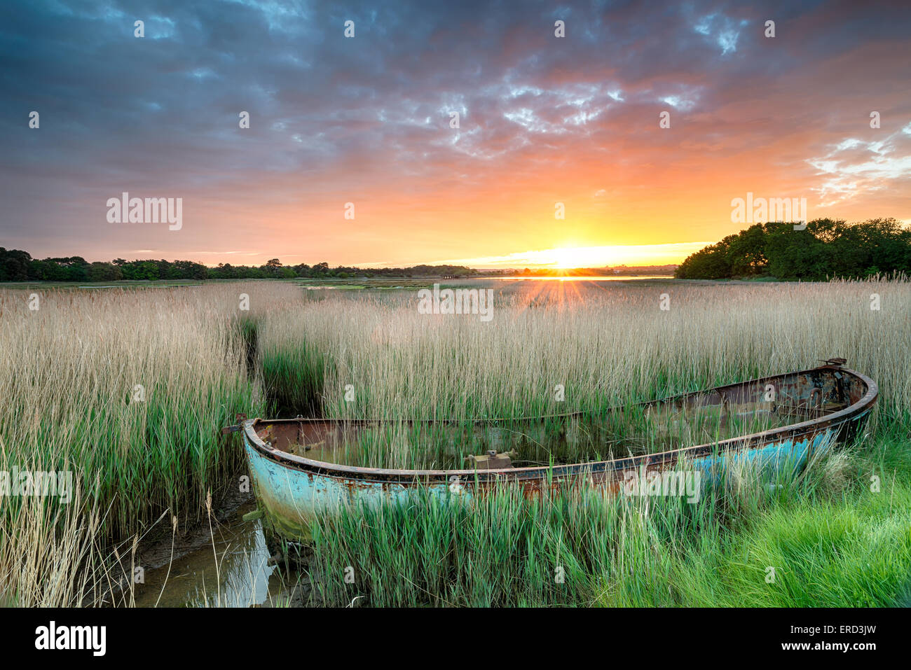 An old boat in reeds at Poole harbour on the Dorset coast - Stock Image