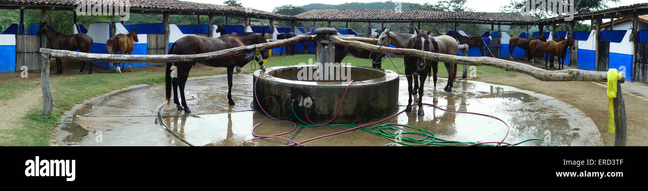 panoramic view of polo and riding ponies stable; Careyes; Costa Careyes, Jalisco, Mexico - Stock Image