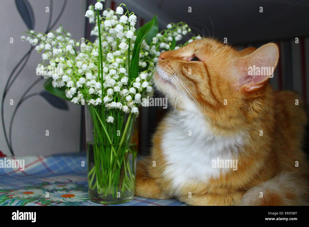 Ginger color cat smell aroma white lily of valley flowers stock ginger color cat smell aroma white lily of valley flowers izmirmasajfo
