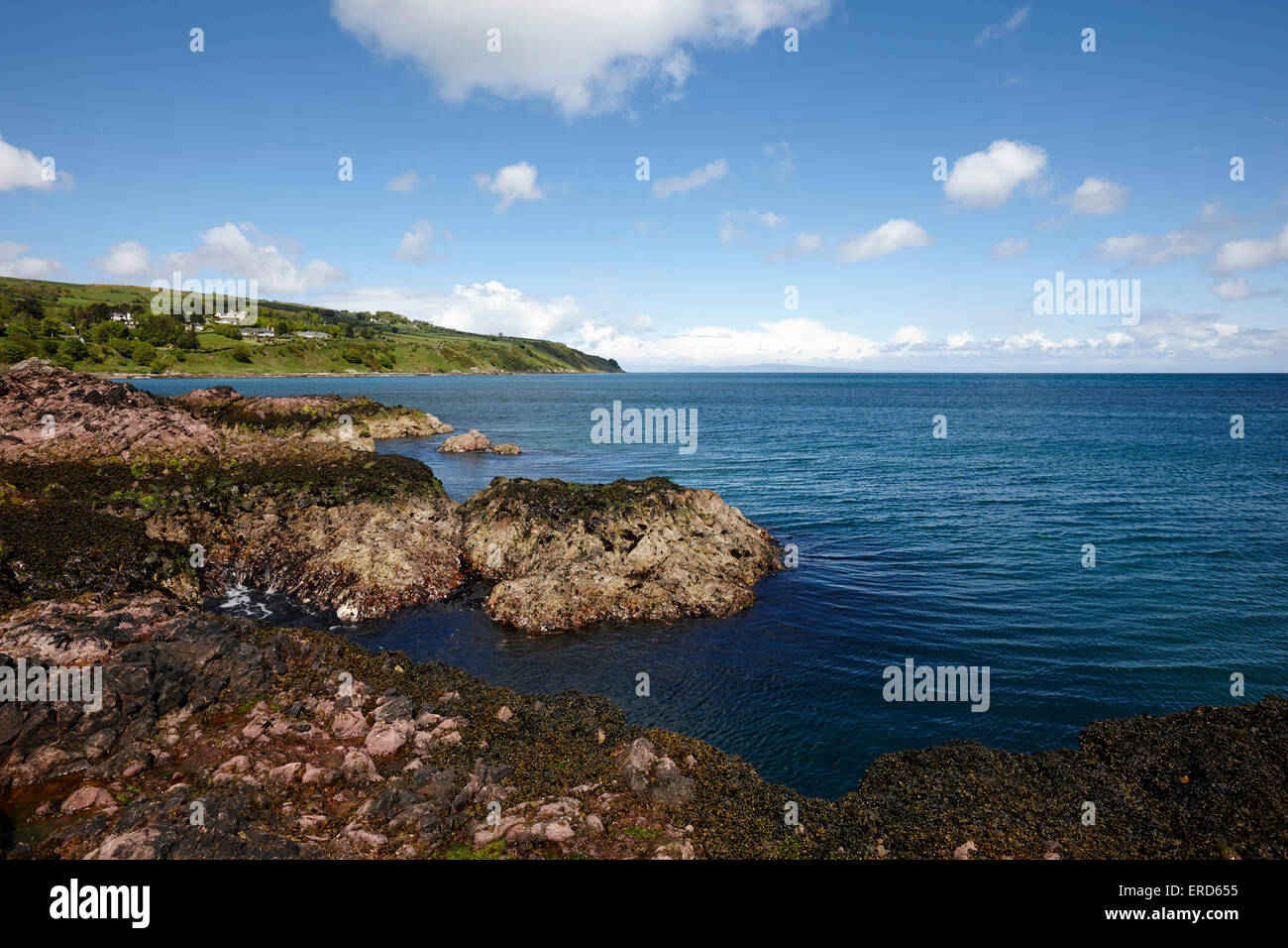 promontory pink dacite rocks at limerick point Cushendall County Antrim Northern Ireland UK - Stock Image