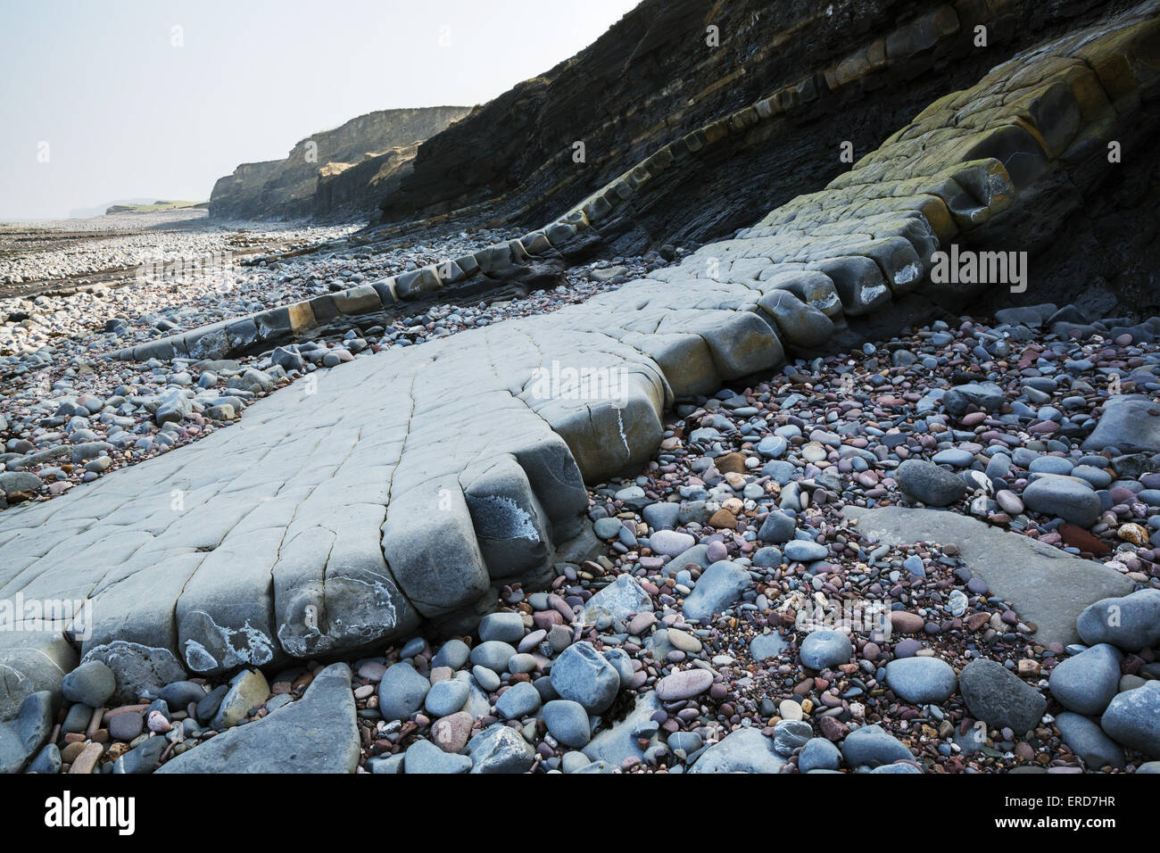 Alternate bands of fossil bearing limestone and shale exposed along the Jurassic coast of West Somerset near East - Stock Image