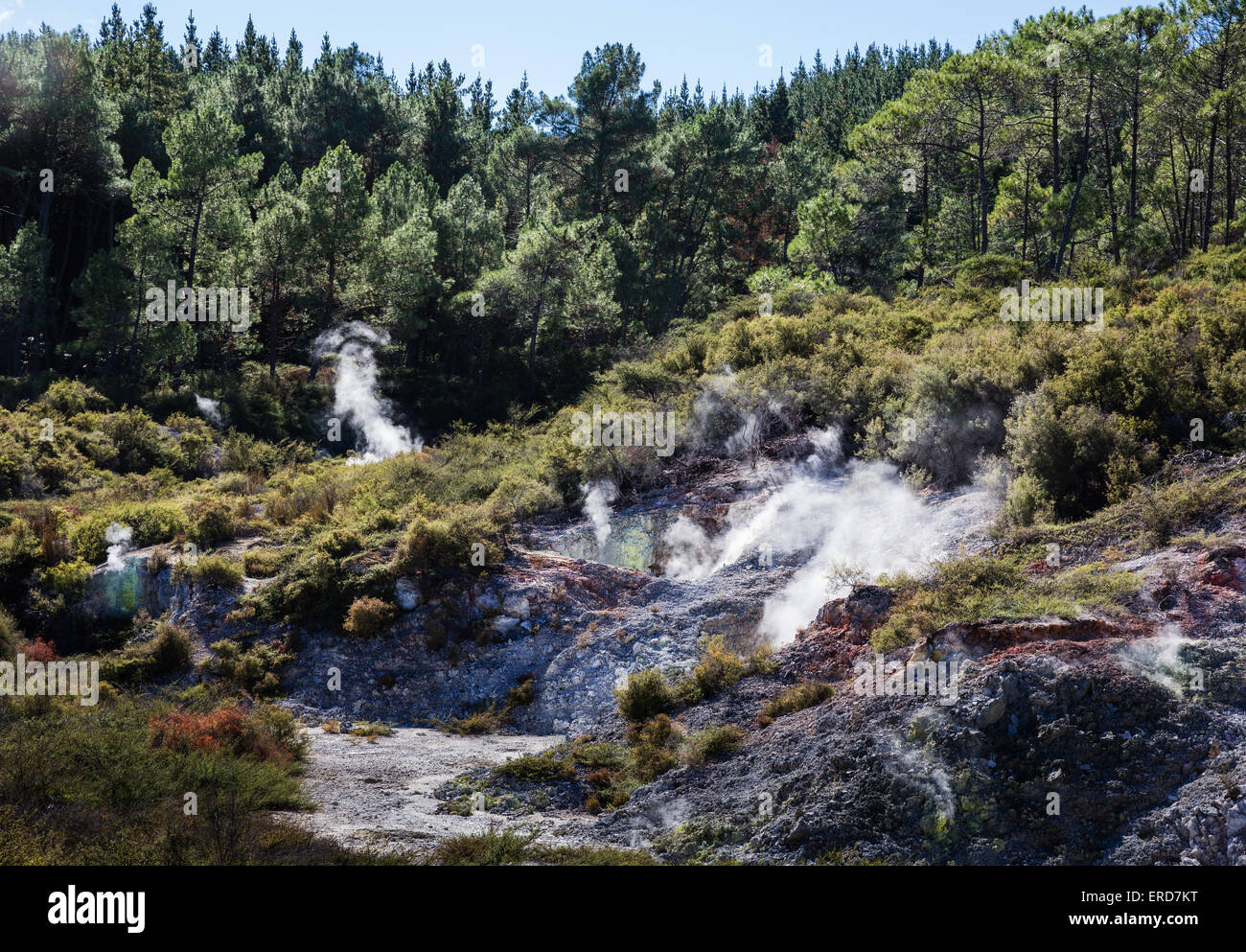 Volcanic landscape of craters and fumaroles amongst scrub and woodland at Wai o Tapu Thermal Wonderland New Zealand - Stock Image