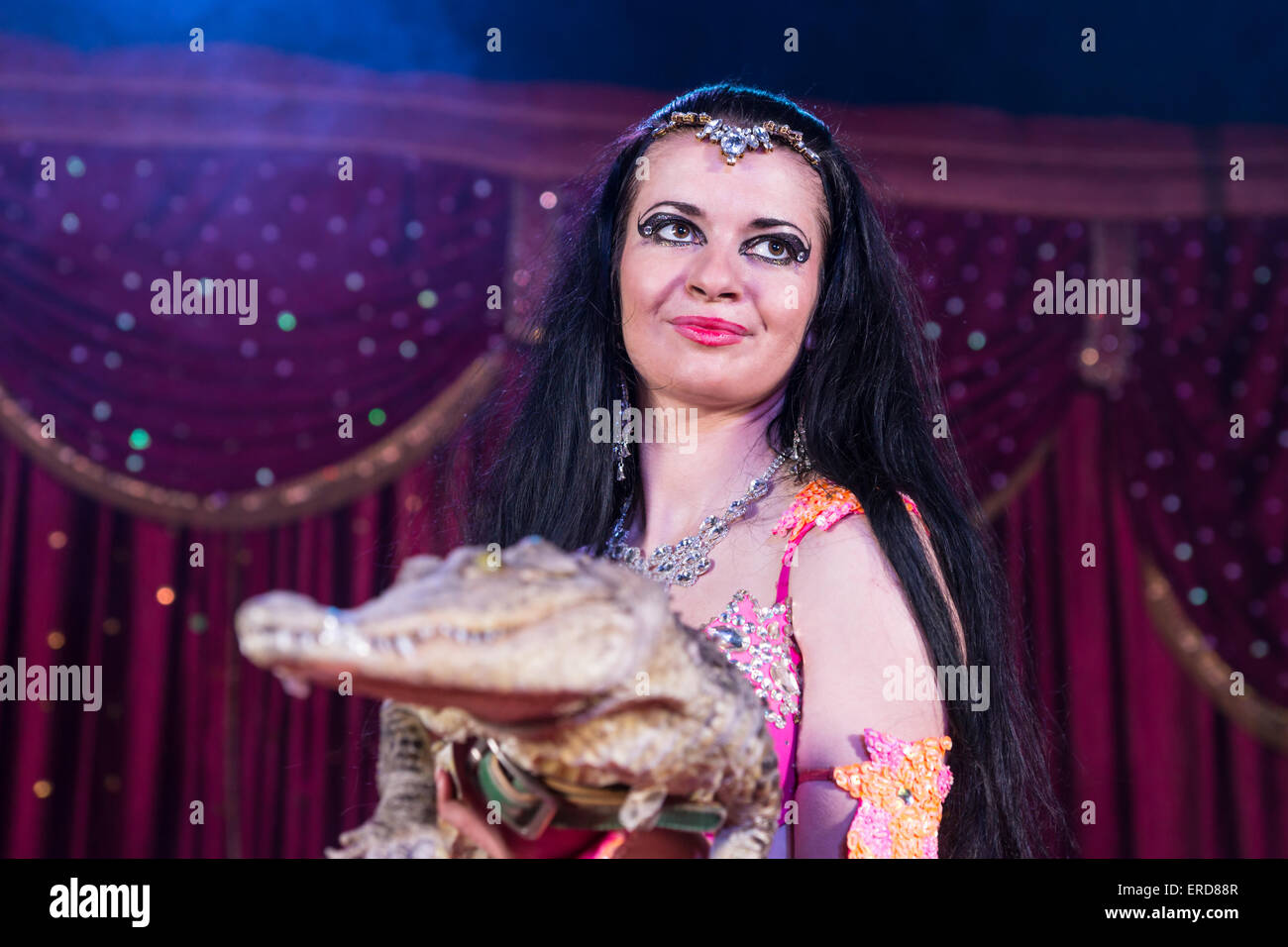 Portrait of Exotic Dark Haired Belly Dancer Wearing Bright Costume Holding Small Crocodile While Standing on Stage Stock Photo