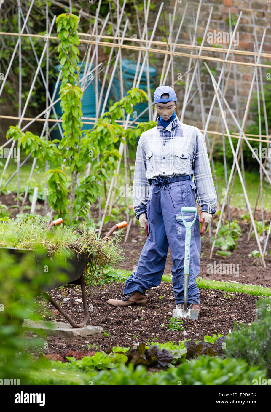 Stylishly dressed scarecrow in an English kitchen garden with baseball cap and spade - Stock Image