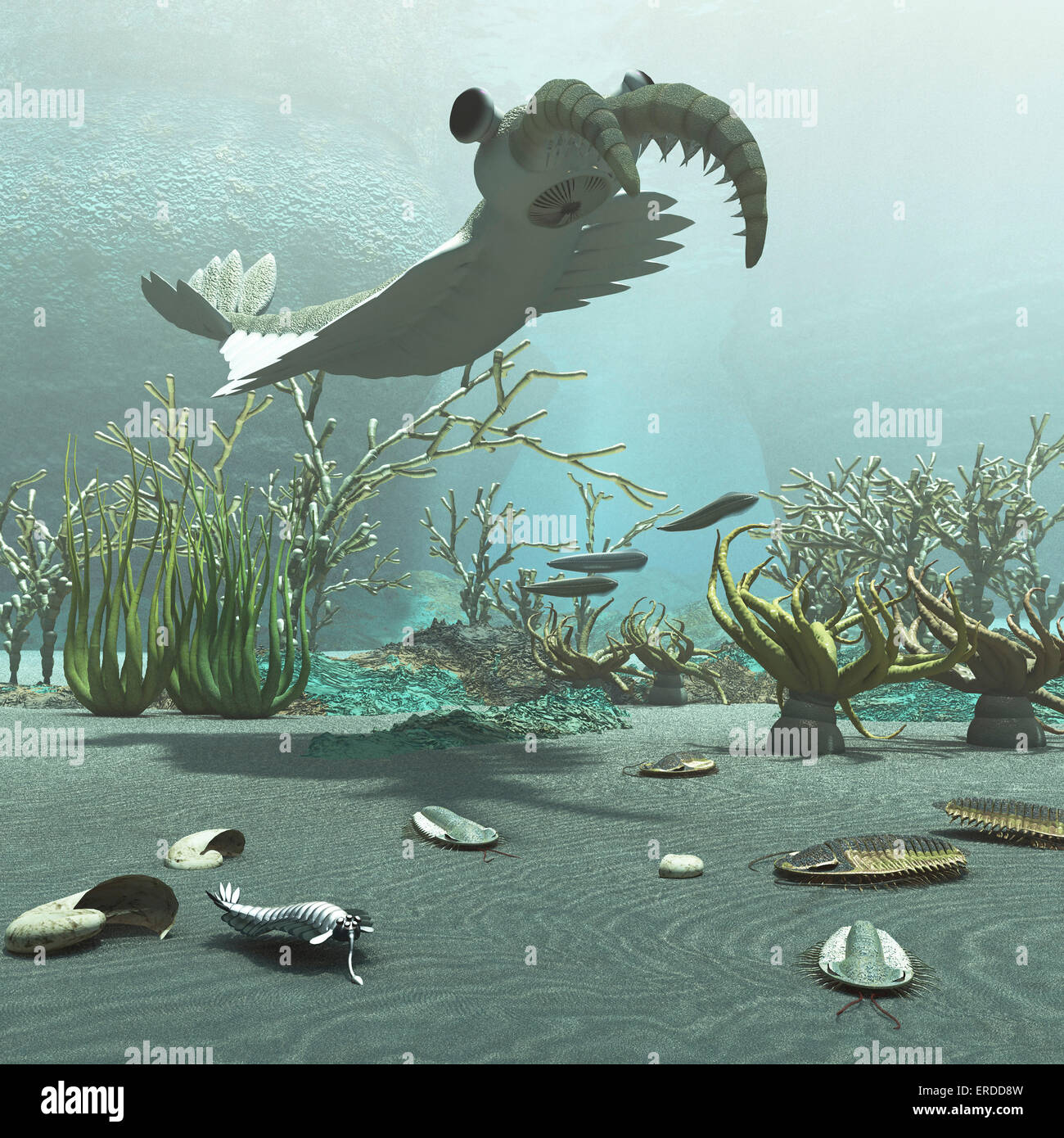 Animals and floral life from the Cambrian period about 500