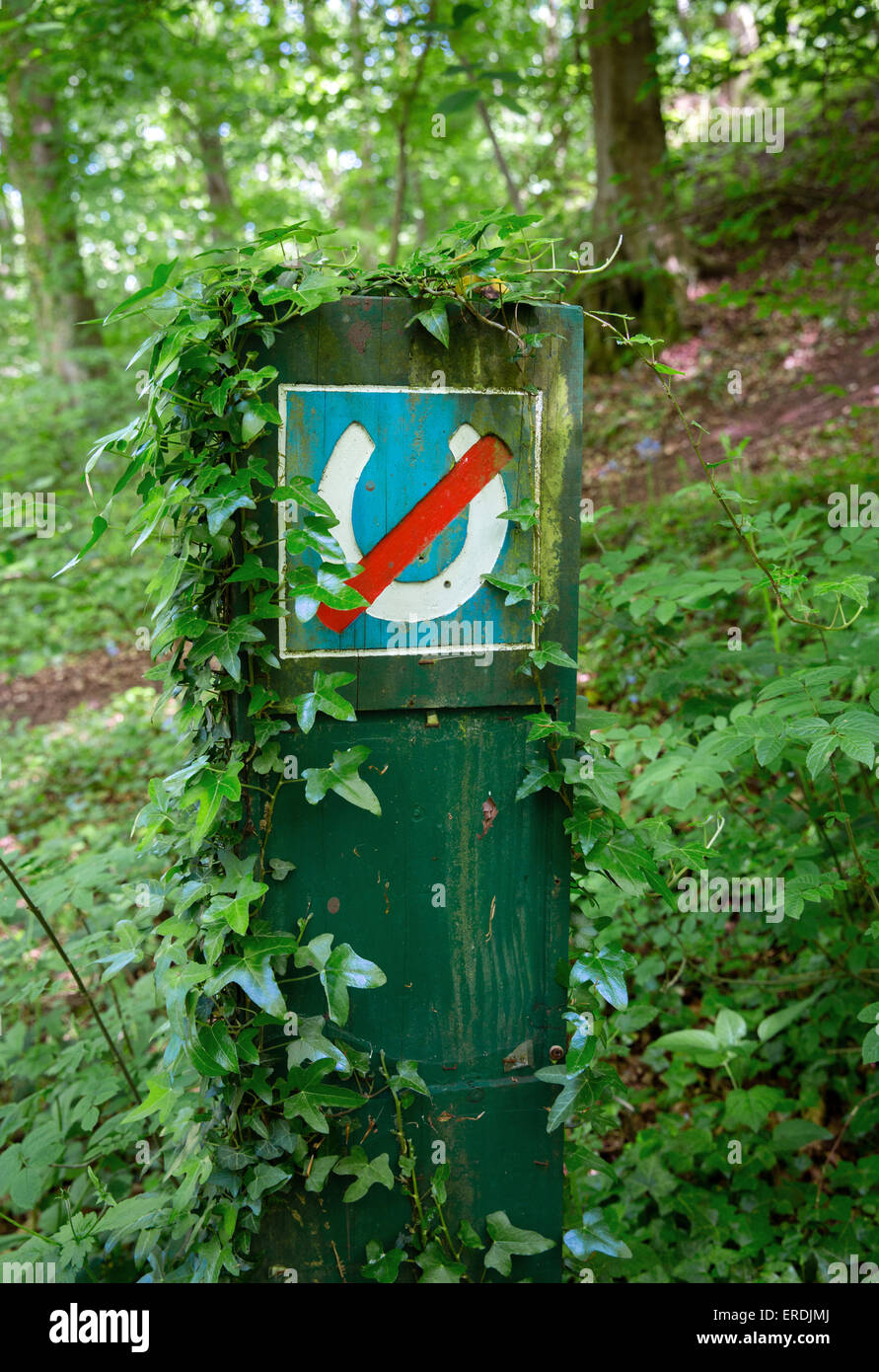 Ivy clad no horses sign at the entrance to an English wood UK - Stock Image