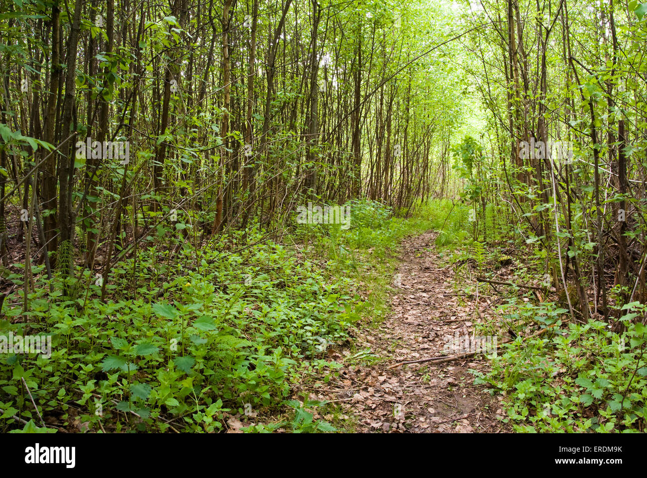 Footpath In A Dense Green Forest Natural Landscape Stock