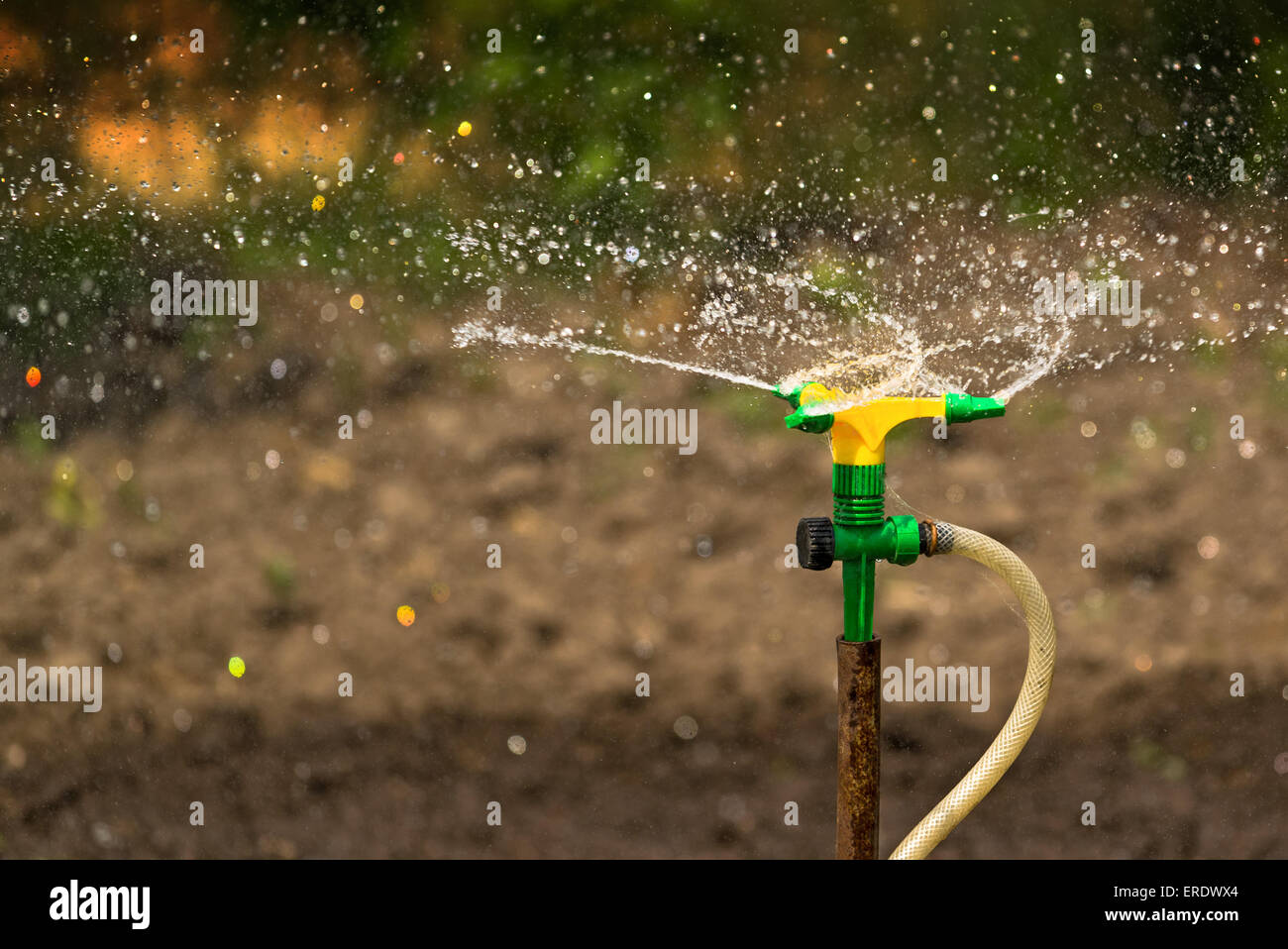 Plastic Home Gardening Irrigation Sprinkler in Operation on Stock ...