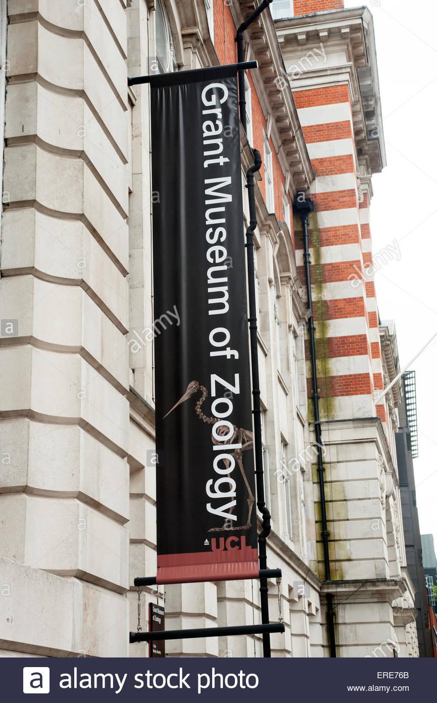 London UK Grant Museum of Zoology - Stock Image