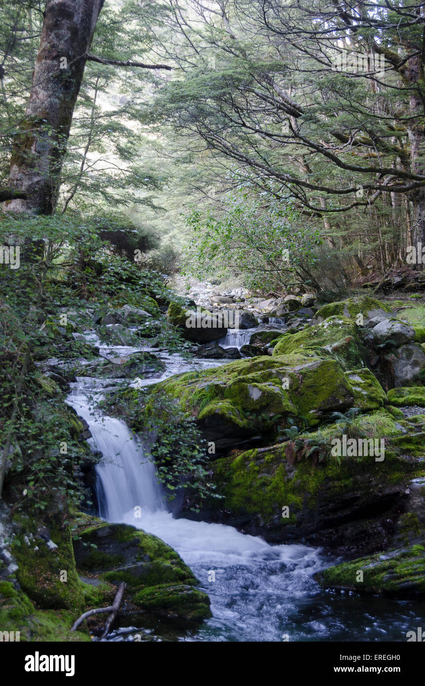 Stream and small waterfall in forest, Mount Nicholas, Central Otago, South Island, New Zealand - Stock Image
