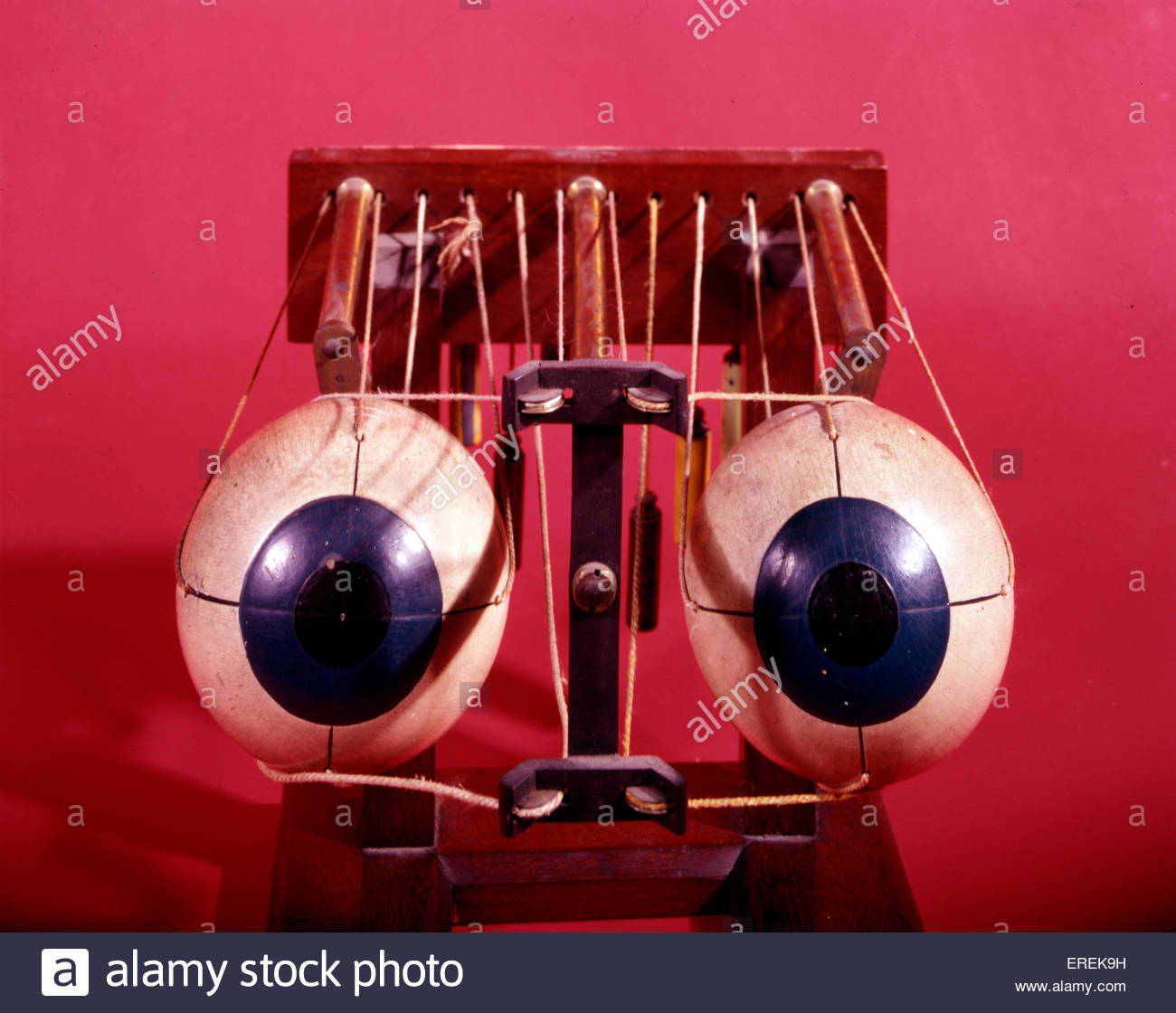 Model of eyes by Hermann von Helmholtz, German  physician and physicist (1821 –  1894). - Stock Image