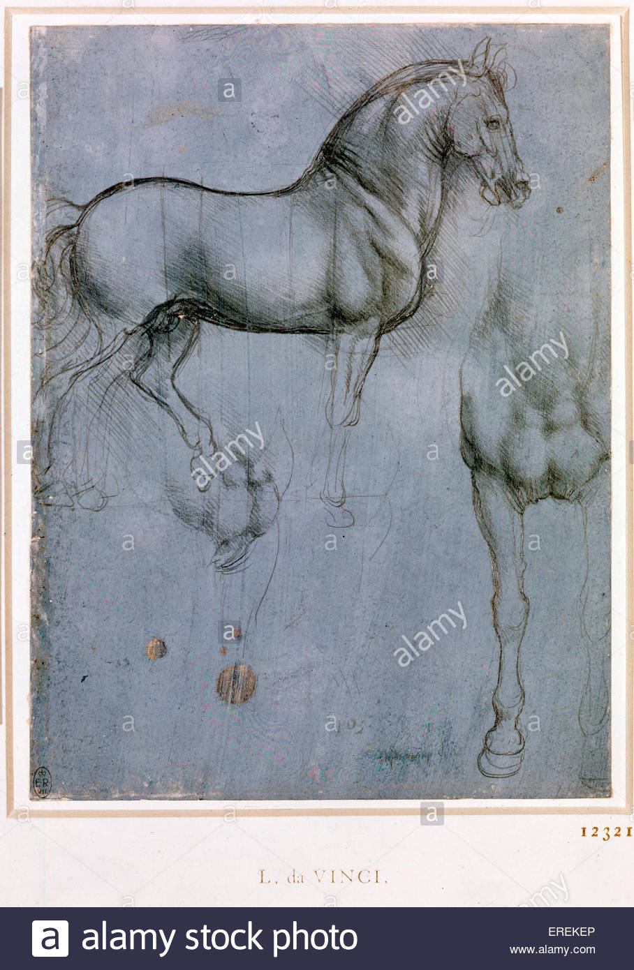 A horse in profile, and from the front by Leonardo da Vinci, c.1490. Courtesy of the Royal Collection. Italian artist - Stock Image