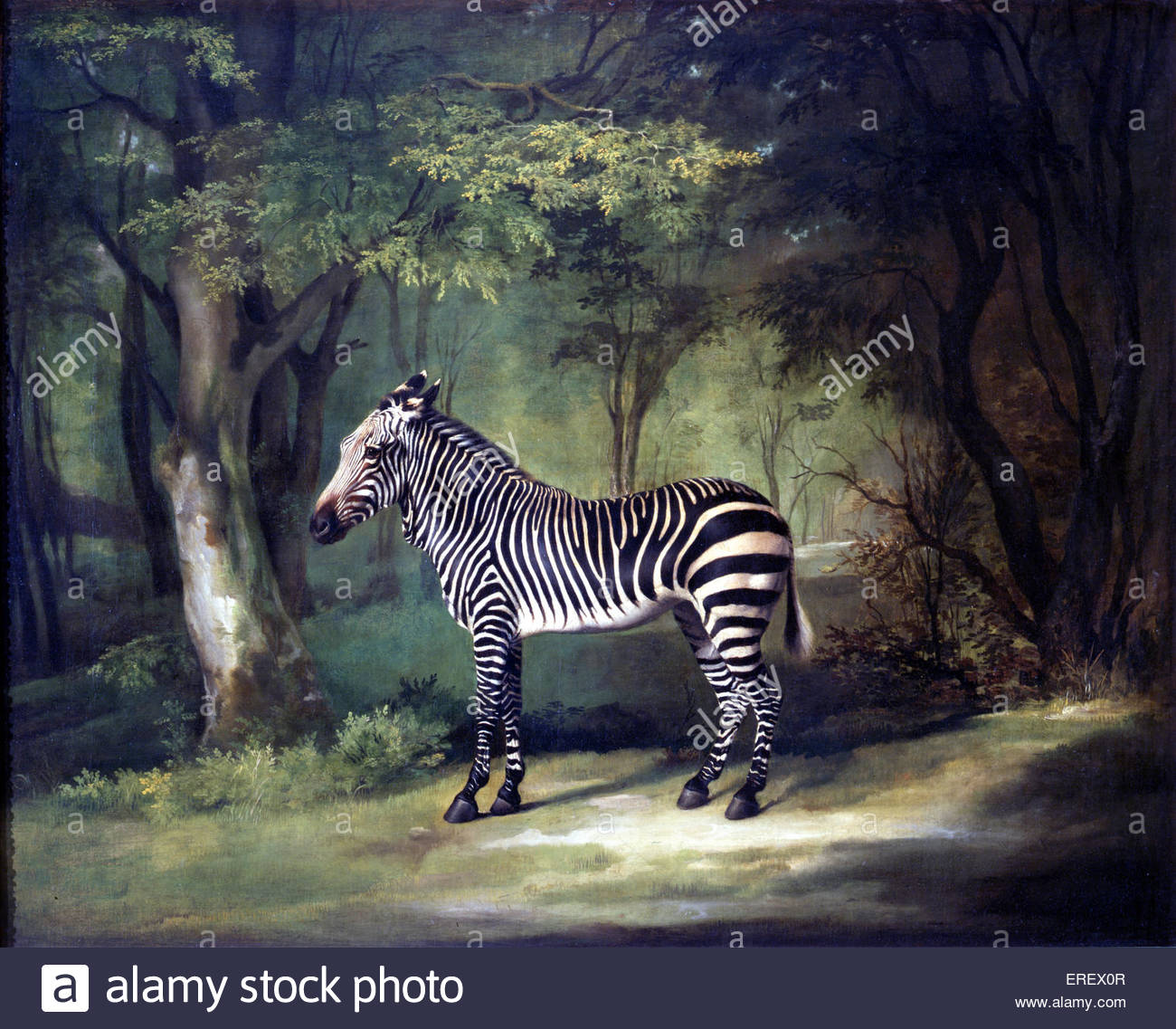 Zebra by George Stubbs, 1762 -63. Oil on canvas, 103 x 127.5 cm. GS: English painter, 25 August 1724 – 10 July 1806. - Stock Image