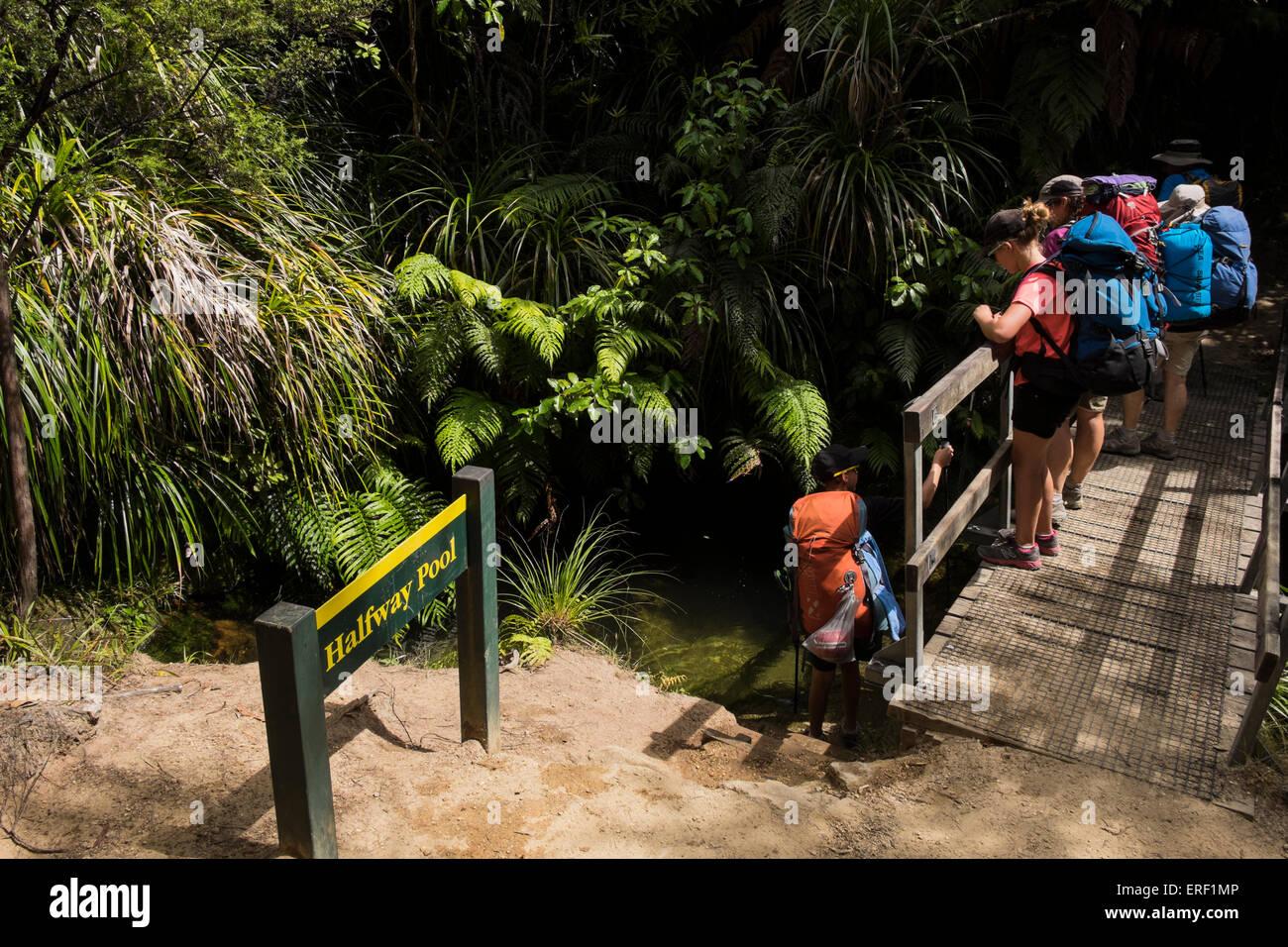 Walkers pause at Halfway Pool along the Abel Tasman coastal track, New Zealand. - Stock Image