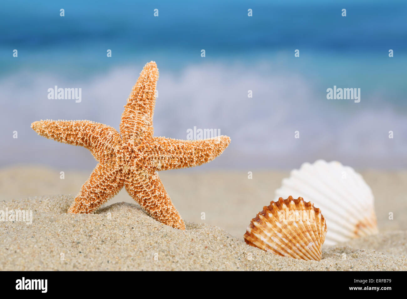 Beach scene in summer on vacation with sand, sea shells and stars, copyspace - Stock Image