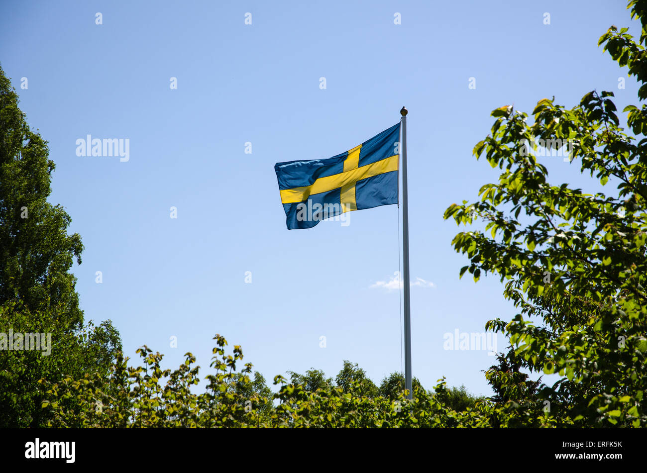 Backlit swedish flag waving at a flagpole surrounded of green branches - Stock Image