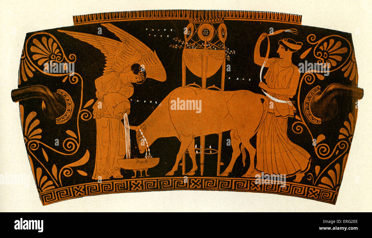 Greek red figure vase showing women caring for a sacrificial bull. Athenian, circa 5th century BCE. - Stock Image