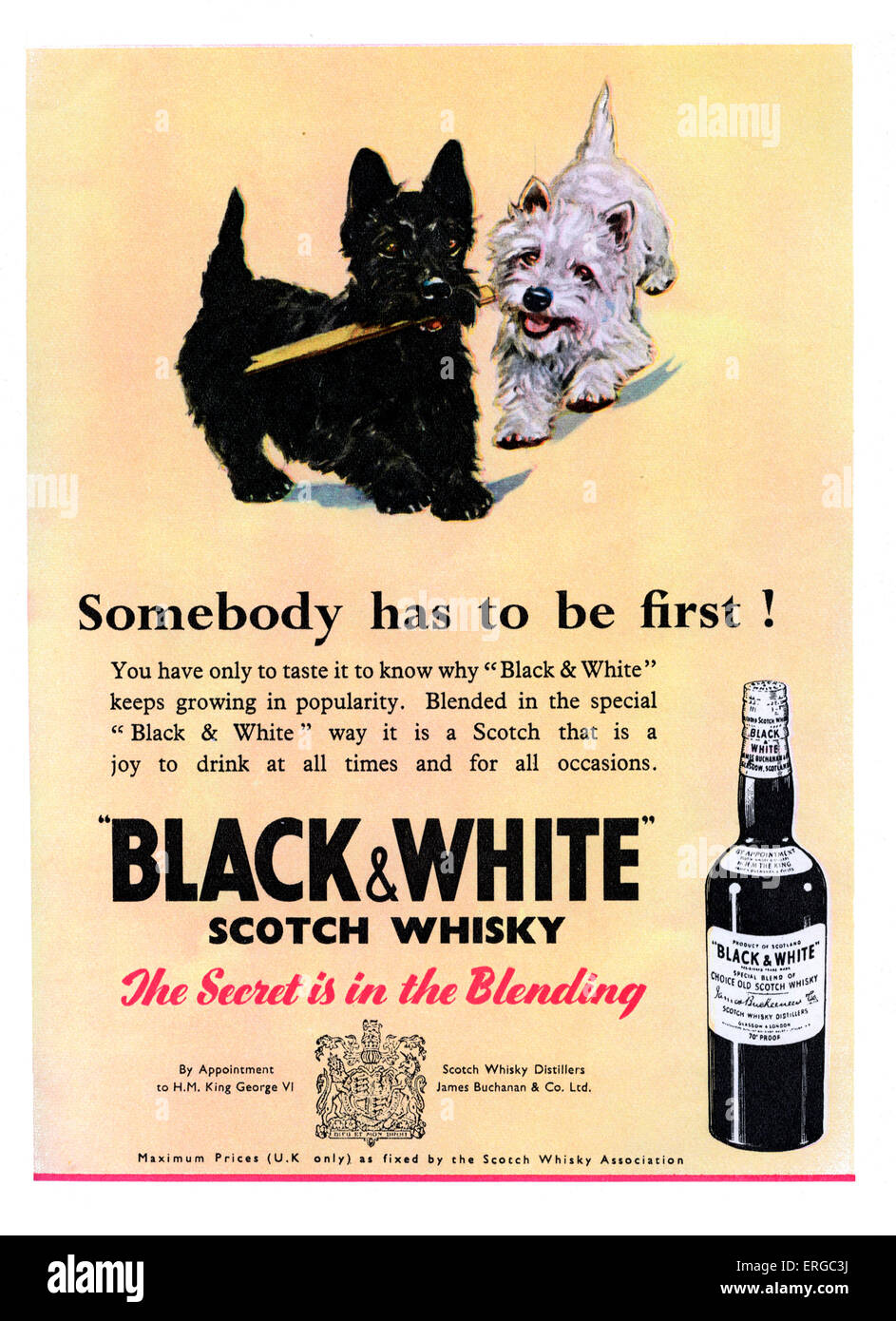 Advertisement for Black & White Scotch Whiskey. Source 1951.  Caption reads 'The secret is in the blending'. - Stock Image