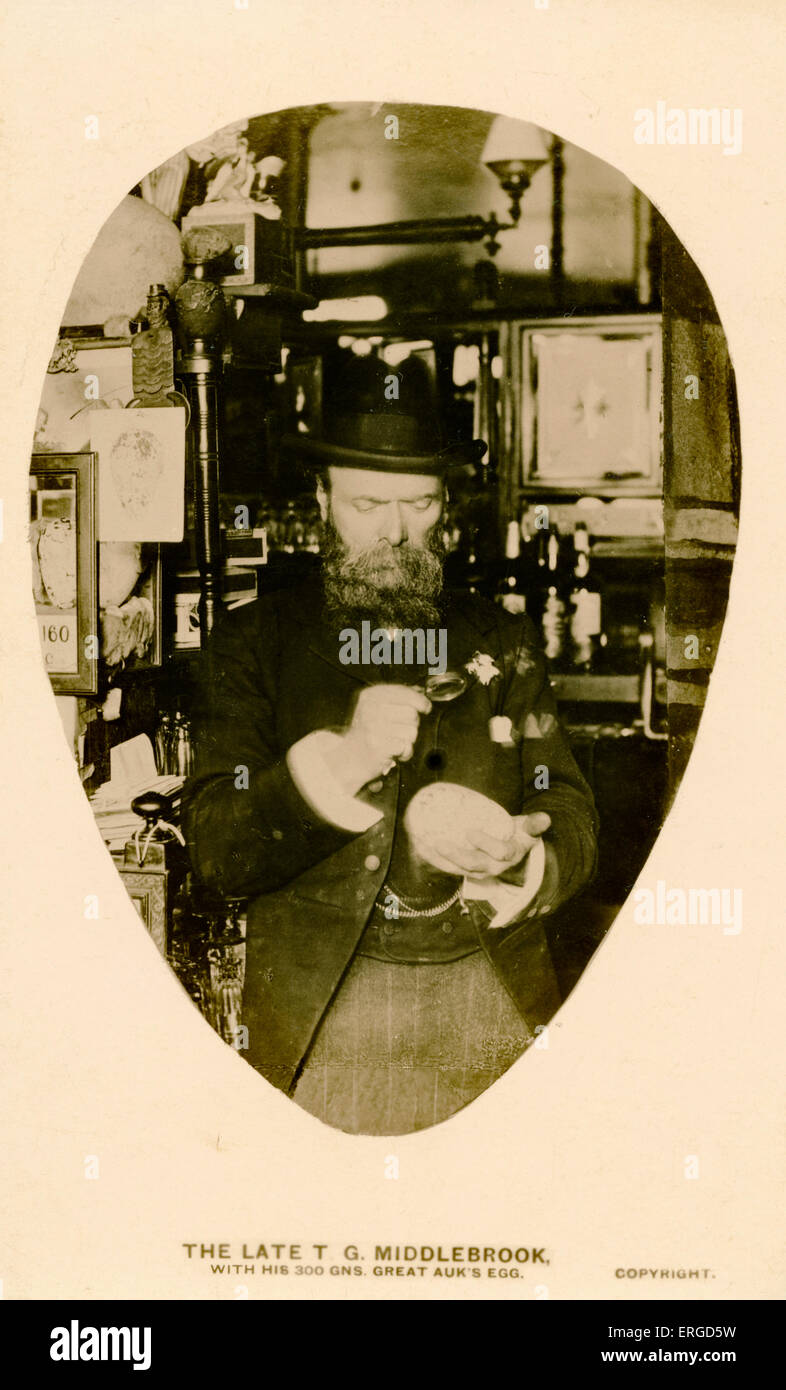 T. G. Middlebrook with a Great Auk 's egg. Caption reads: 'The Late T. G. Middlebrook, with his 300 Gns. - Stock Image