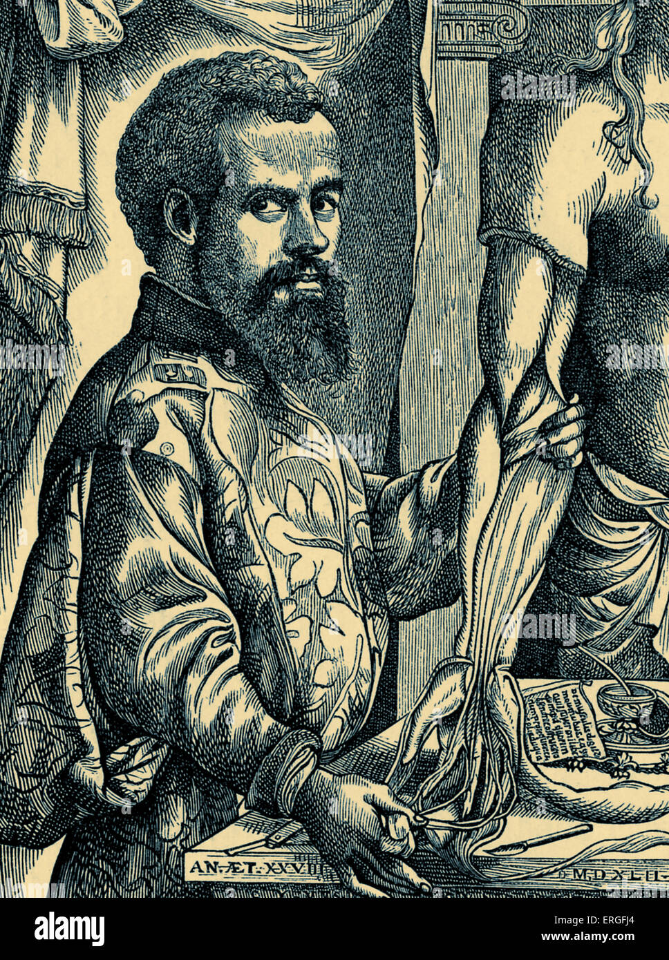 Andrew Vesalius - from woodengraving after design by J. de Calcar, pupil of Titian. Flemish anatomist, physician, - Stock Image