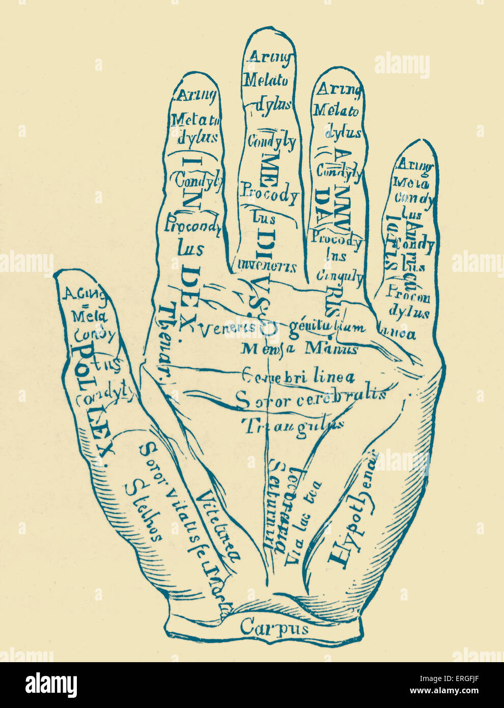 'Specimen of the Left Hand with the Lines and their Horoscopic Denominations'. - Stock Image
