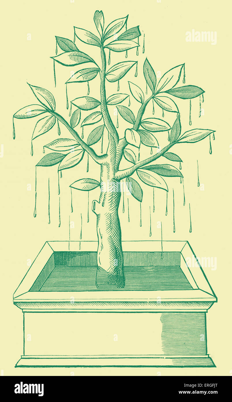 The Tree of Life, or the Weeping- Tree, plantedi in the states of Prester John. From fac-simile of wood engraving, - Stock Image