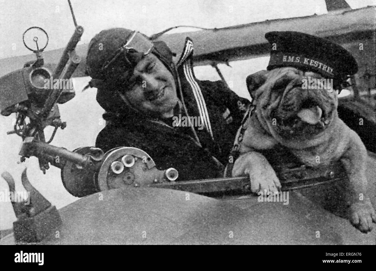WW2 - A pilot on his plane with a British bulldog. - Stock Image