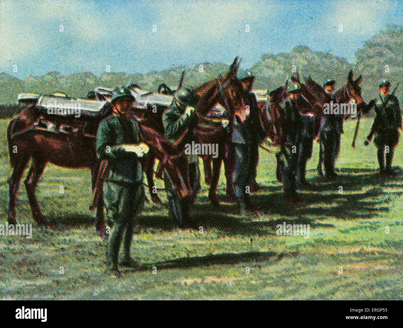 Italian lightweigh tinfantry gun (field gun)packed onto mules, ready for transportation.. (Source: Cigarette cards - Stock Image