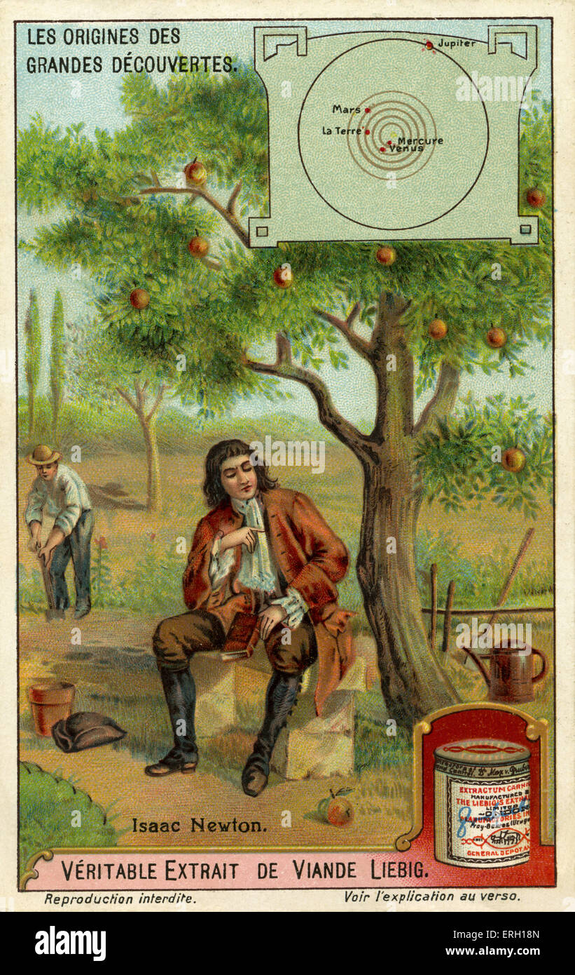 Sir Isaac Newton  and the theory of gravity - sitting next to an apple tree with falling apples.   English physicist, - Stock Image