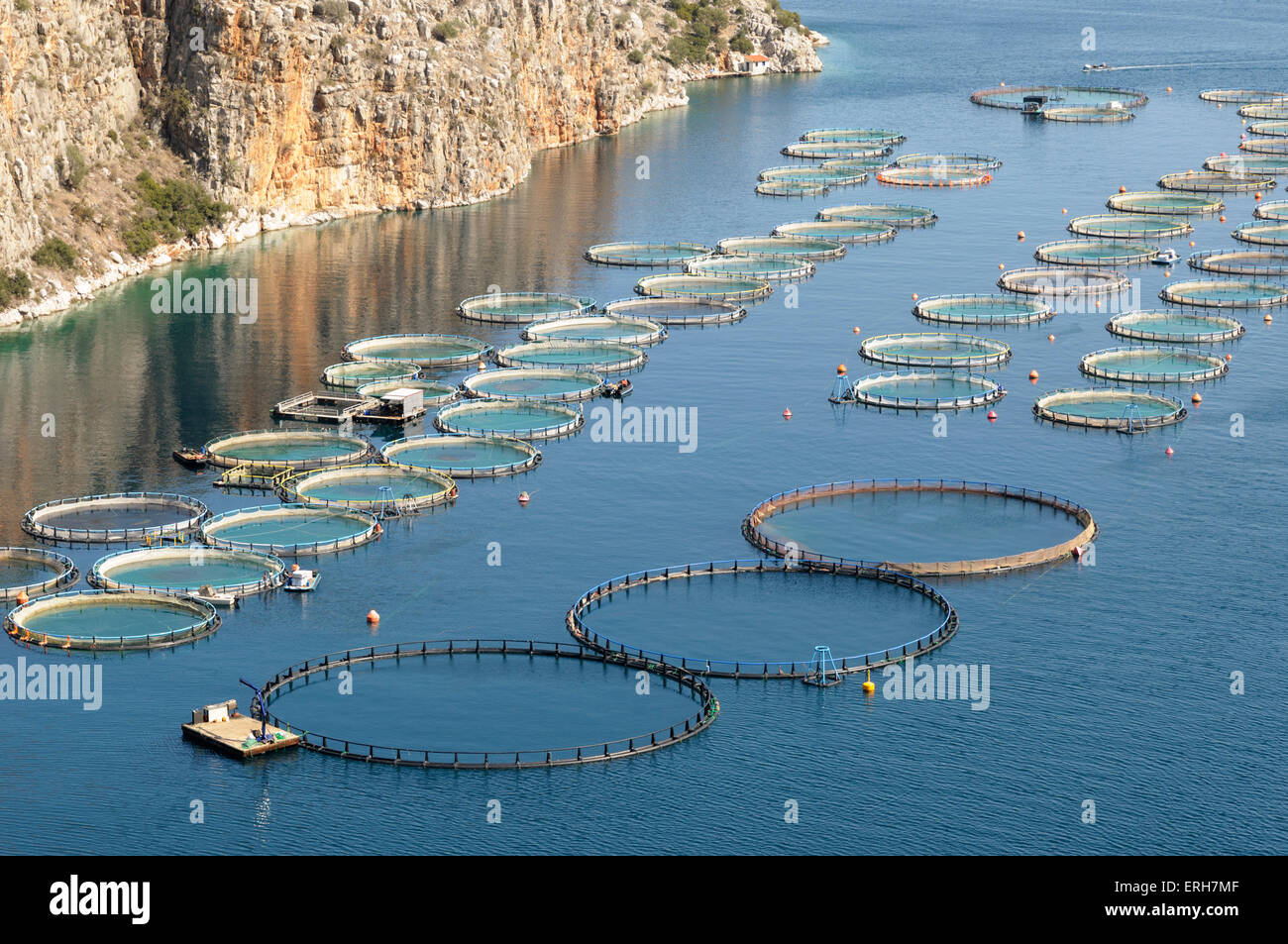 Offshore sea bream and bass fish farming greece stock for What is fish farming