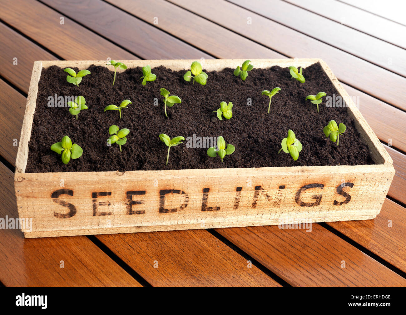 Seedling box with new growth Stock Photo