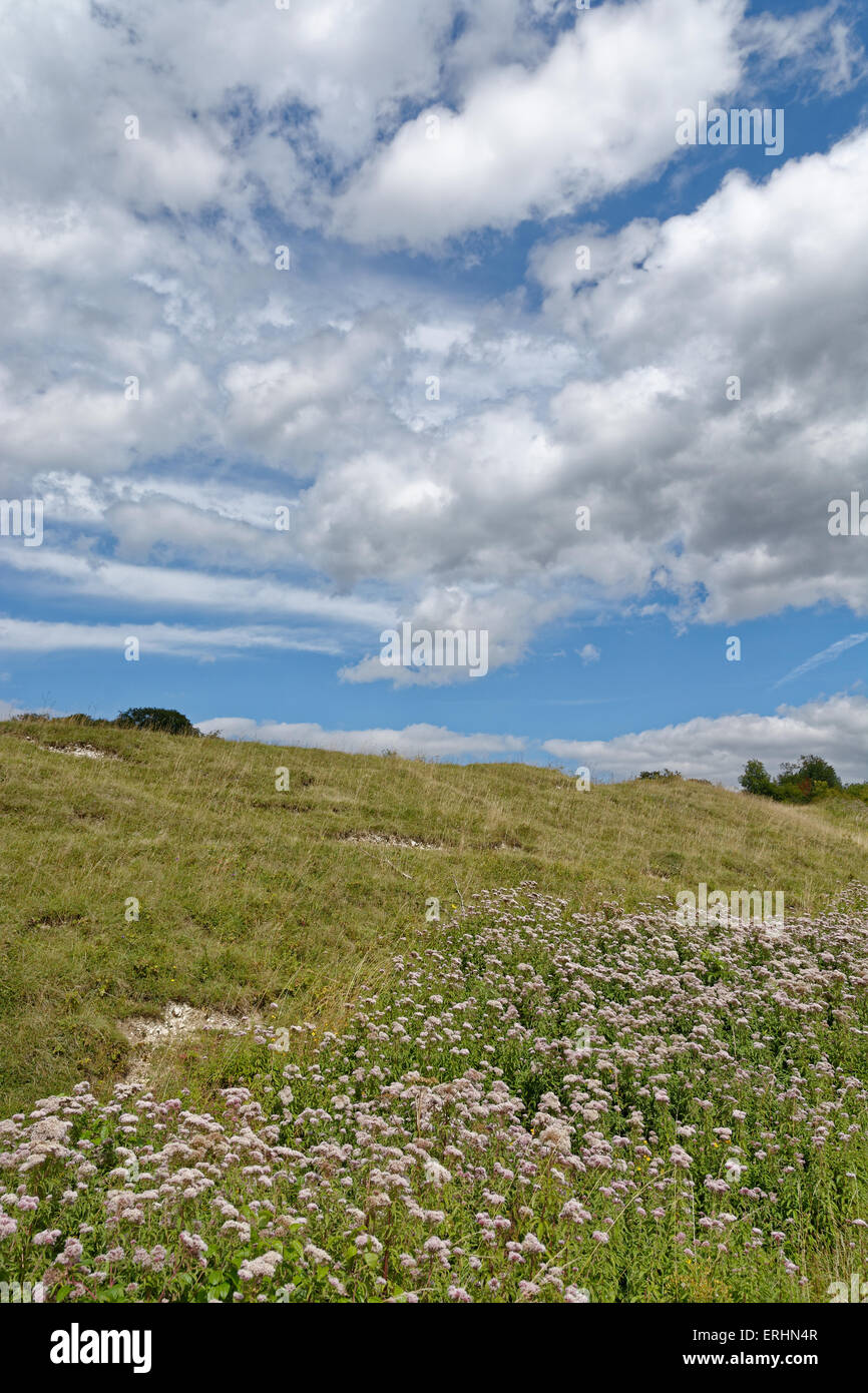 St Cathrin's Hill, Nature Reserve SSI, Winchester, Hampshire, England - Stock Image