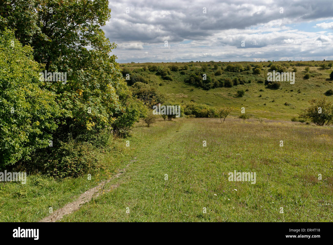 St Cathrin's Hill, Nature Reserve SSI, Winchester, Hampshire, England, UK. - Stock Image