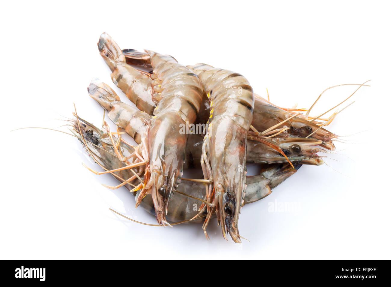 Fresh raw tiger prawns. Isolated on white background - Stock Image