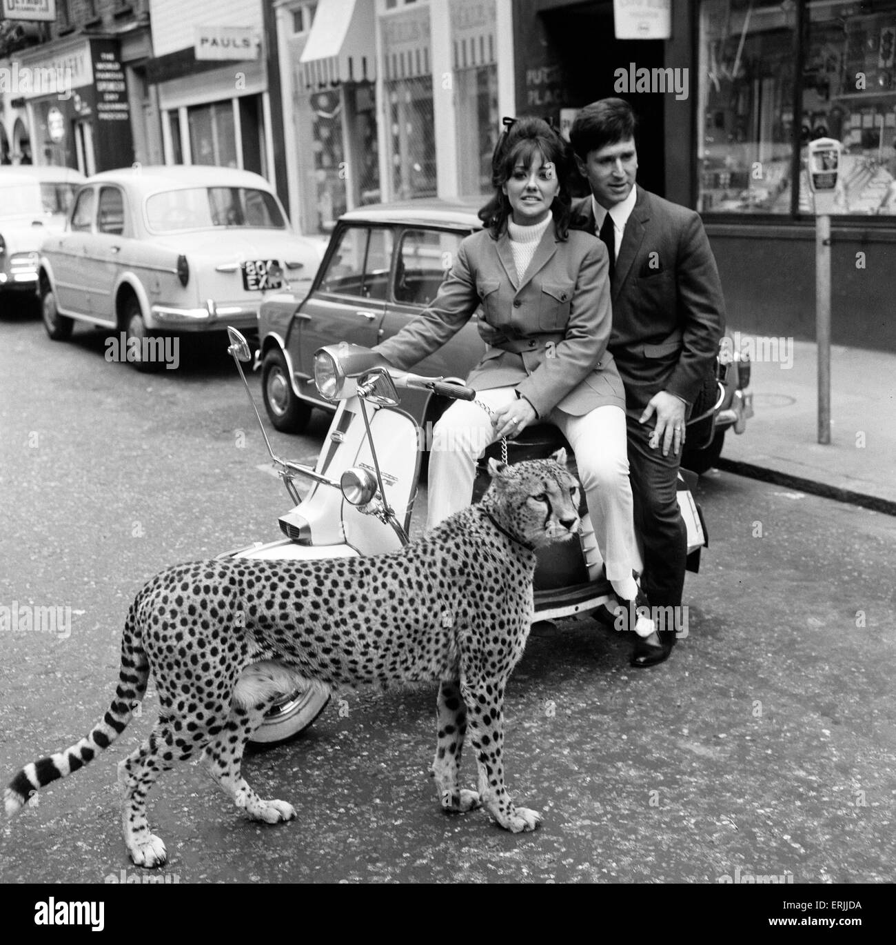 Carnaby Street, London, 4th April 1966. Photo-call for opening of new Tomcat Shop. Kinna the Cheetah with model - Stock Image