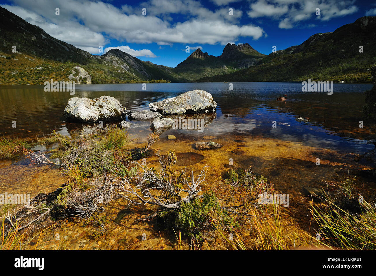 Cradle Mountain National Park with Dove lake - Stock Image