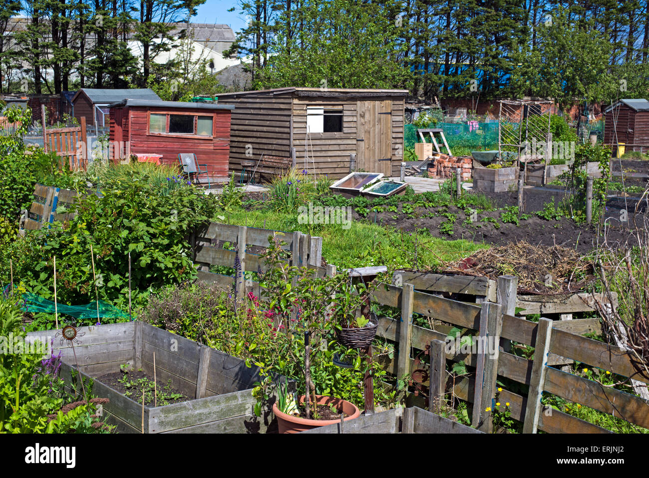 Allotments by Leith Links in Edinburgh, Scotland, UK. - Stock Image