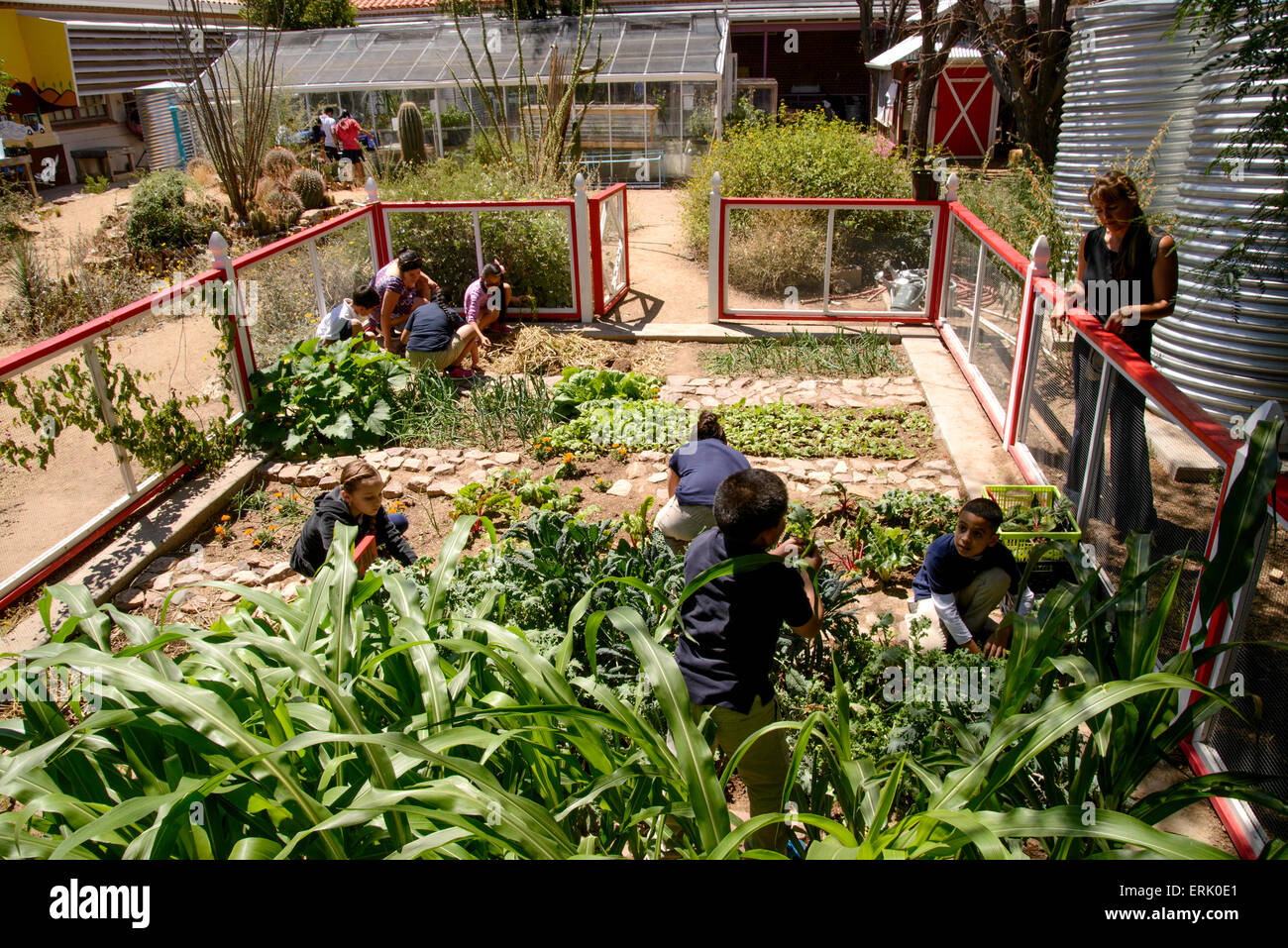 Bon Manzo Elementary School Students Work In The Schoolu0027s Organic Garden, Tucson,  Arizona, USA