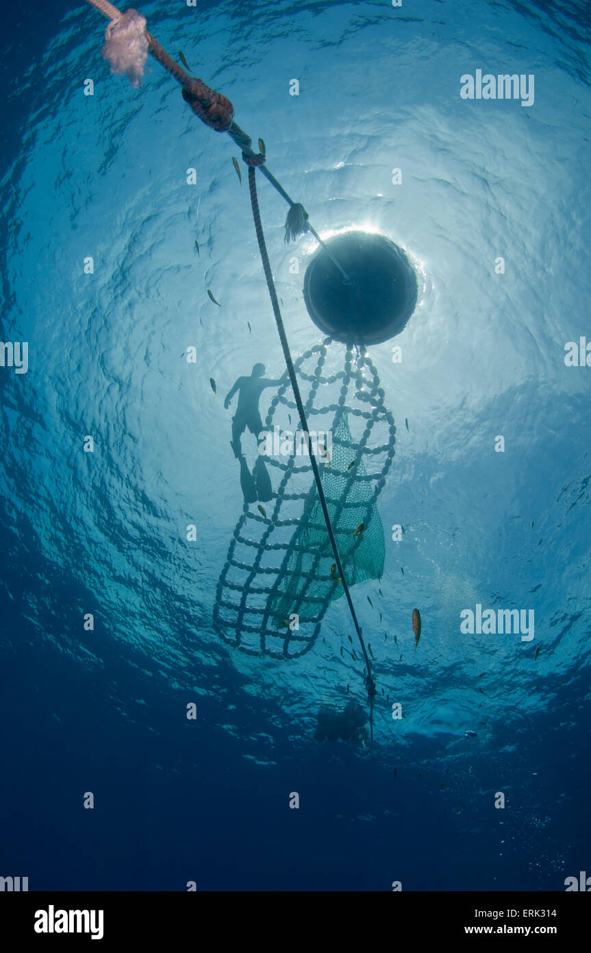 Fish Aggregation Device, silhouetted at surface with worker, South Male Atoll, Maldives - Stock Image
