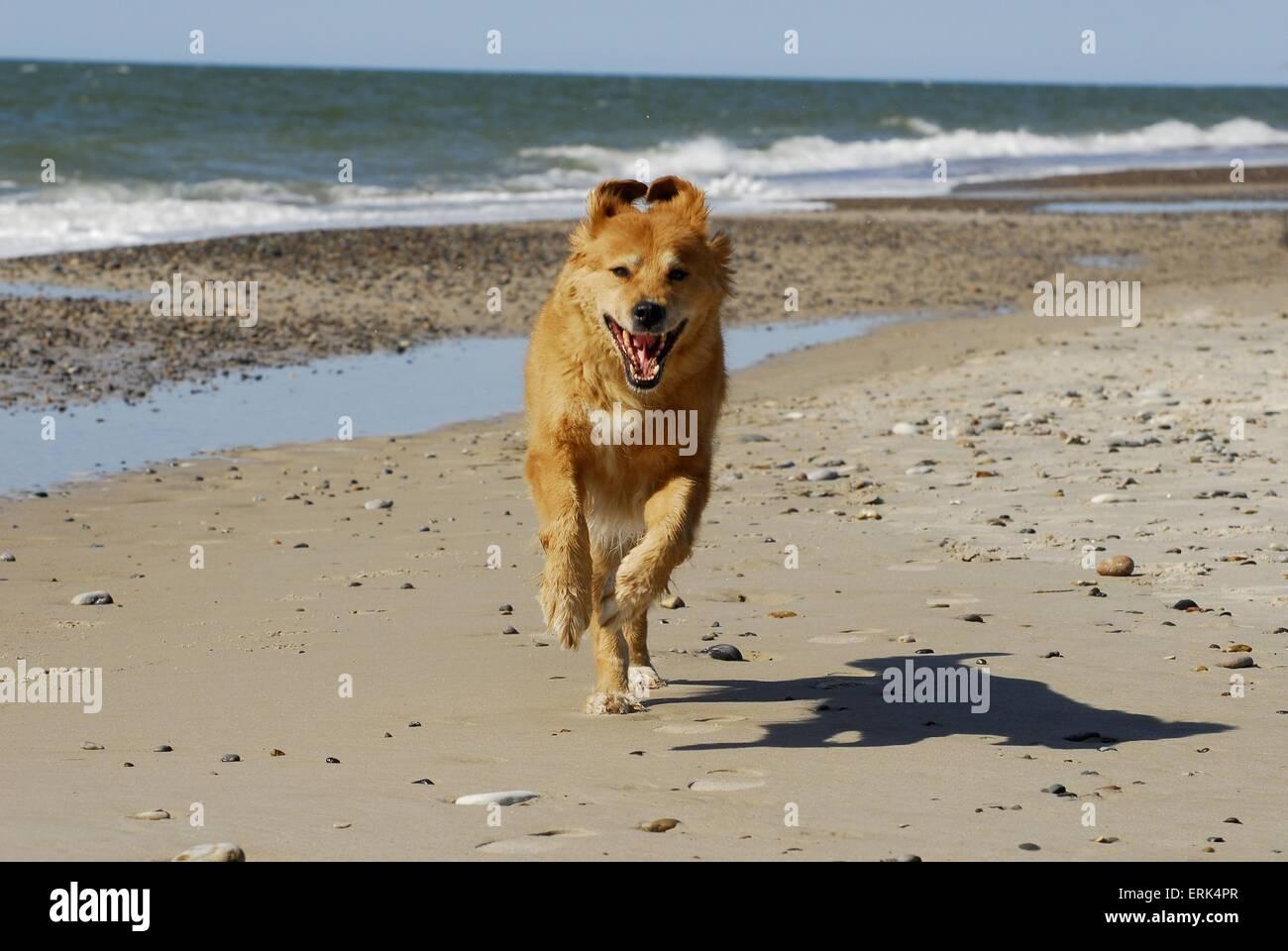dog at the beach - Stock Image