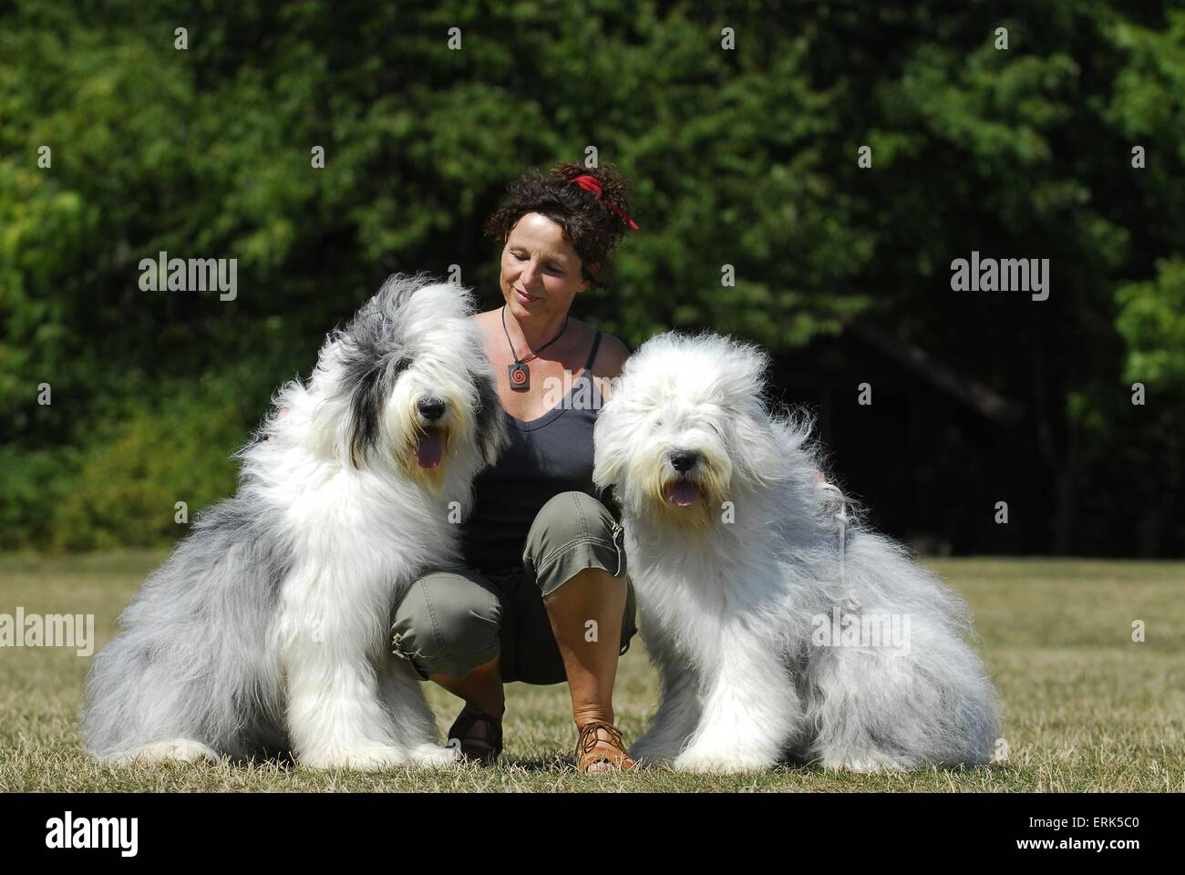 Bobtails High Resolution Stock Photography and Images - Alamy