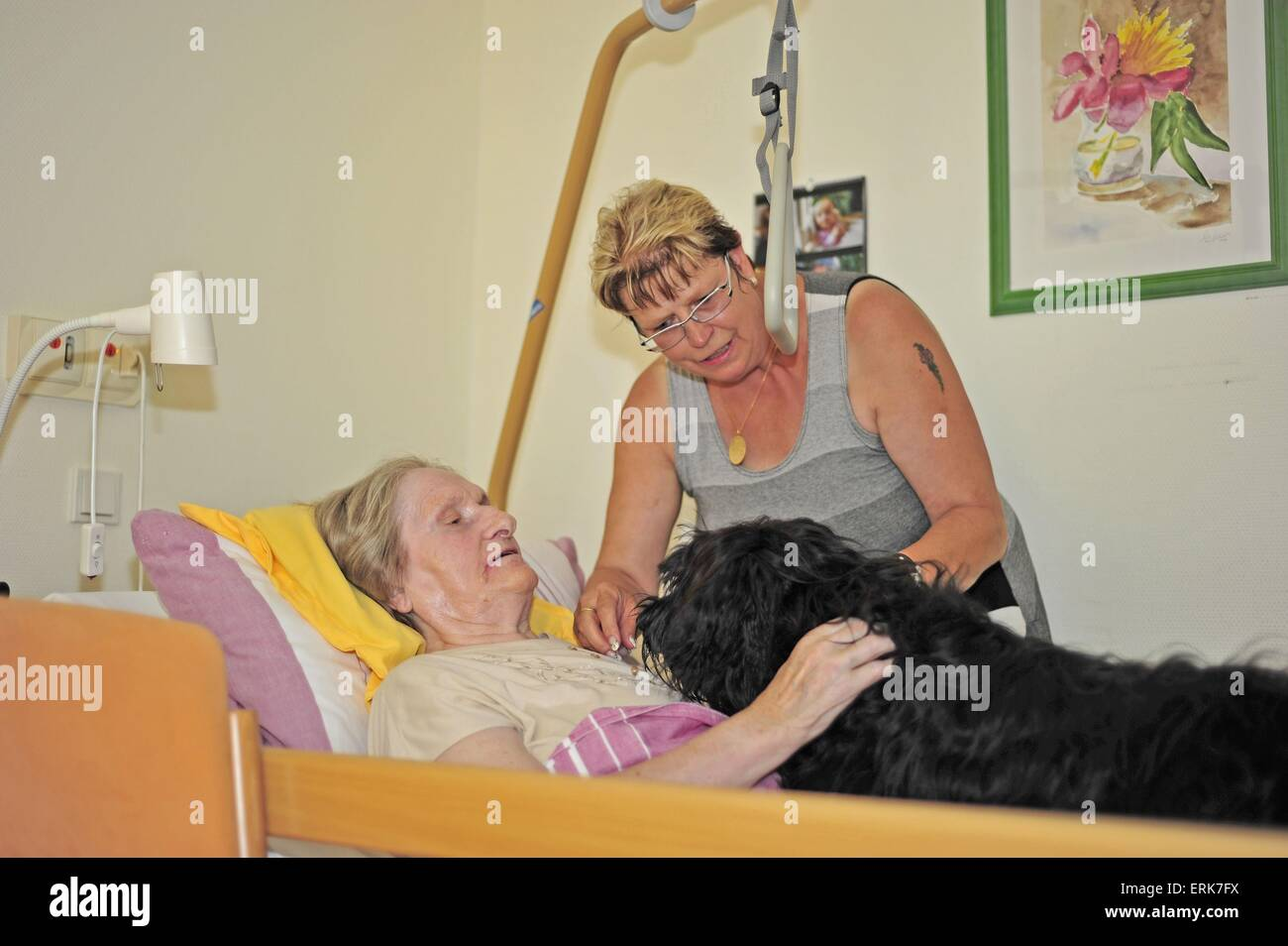 therapy dog at work - Stock Image