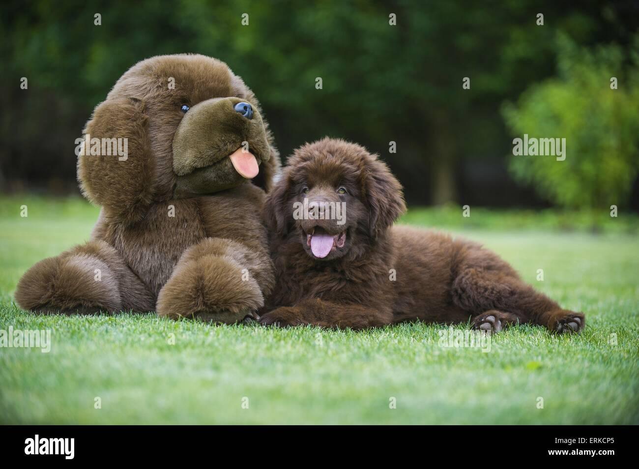 Soft Cuddly Dog Toys Stock Photos Soft Cuddly Dog Toys