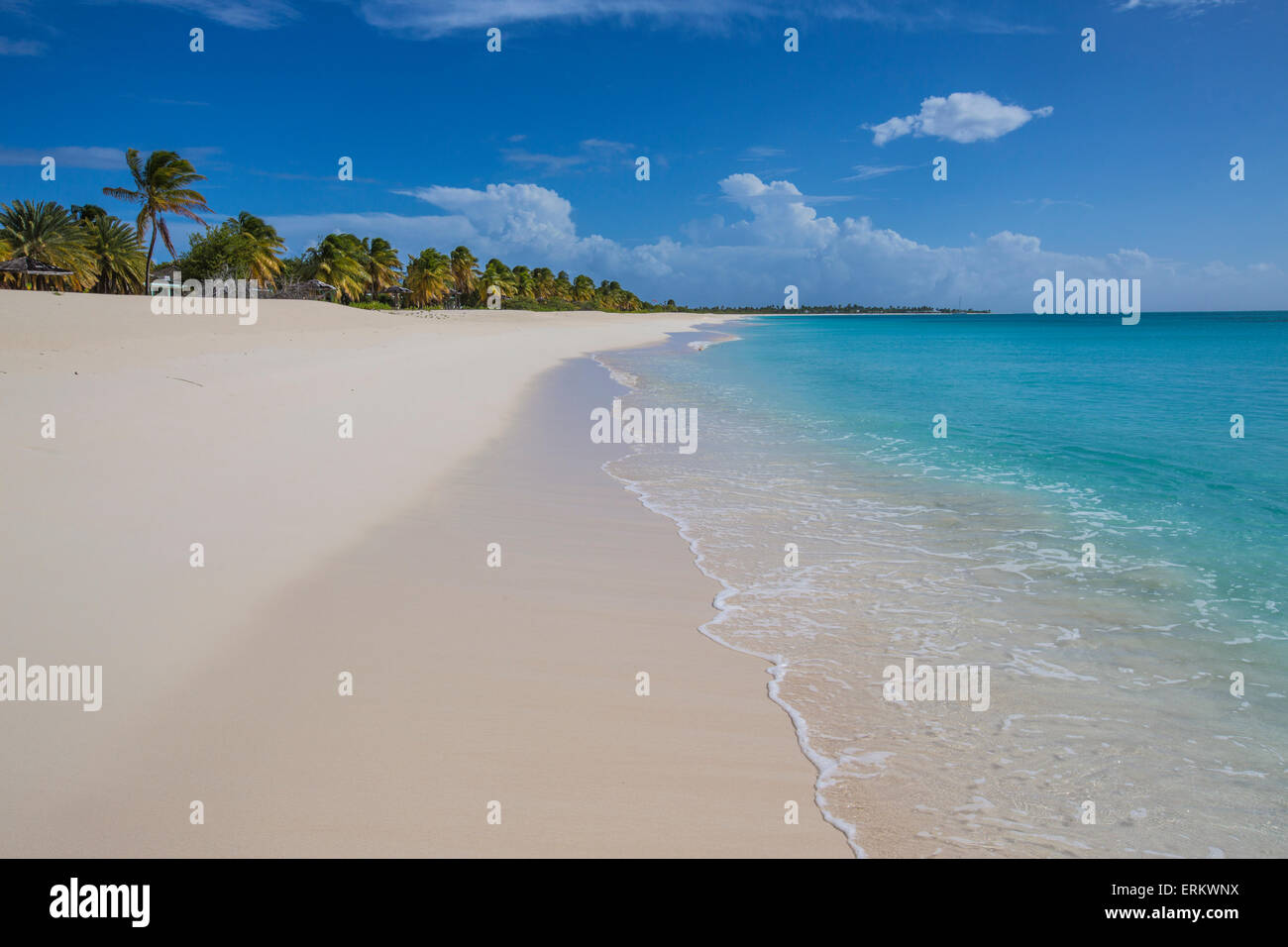 The coconut trees lapping on the beach of K-Club, thin strip of sand overlooking the Caribbean Sea, Barbuda - Stock Image