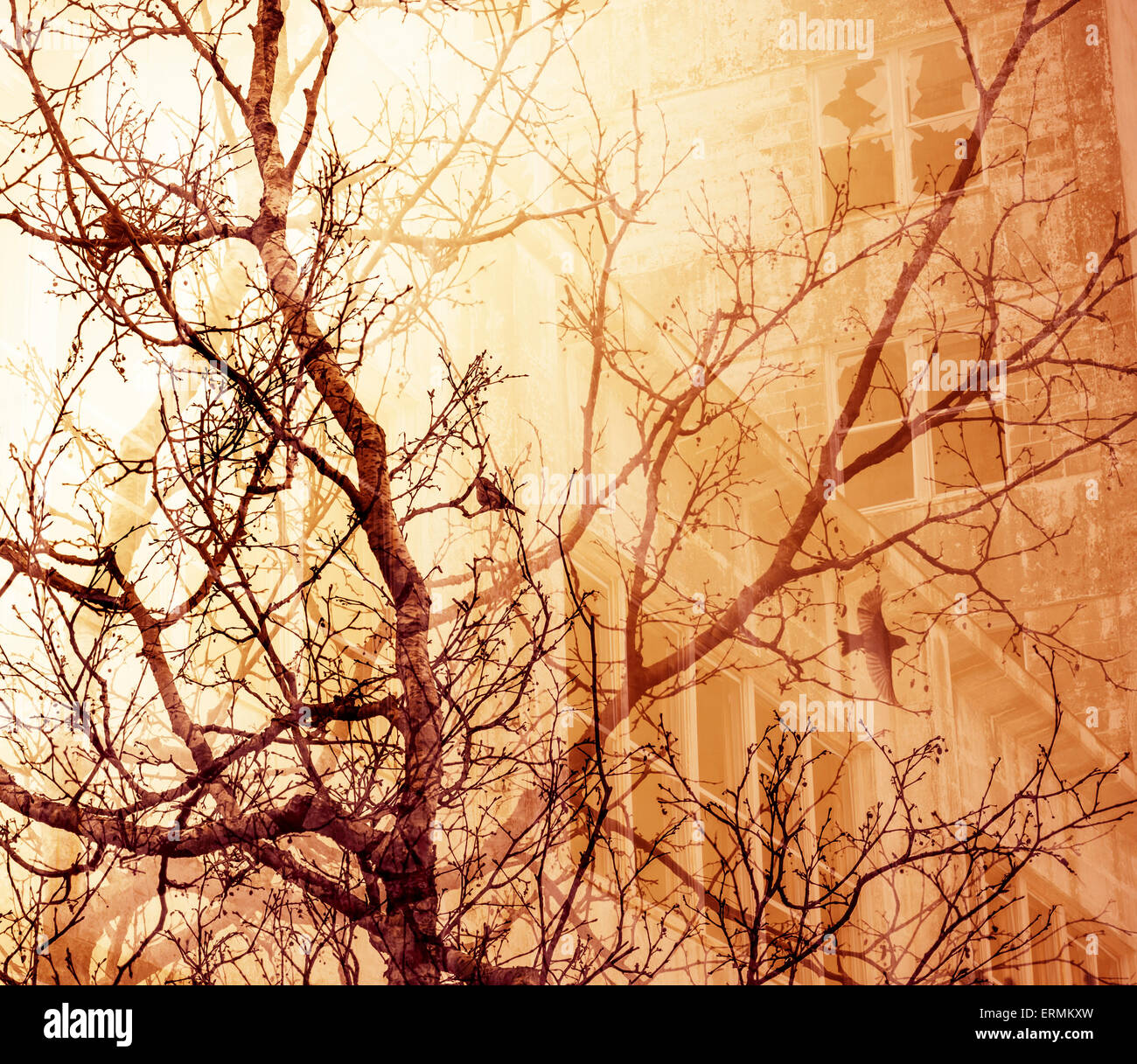 Bare tree branches with birds overlaid with an abandoned building for a dream-like look. - Stock Image