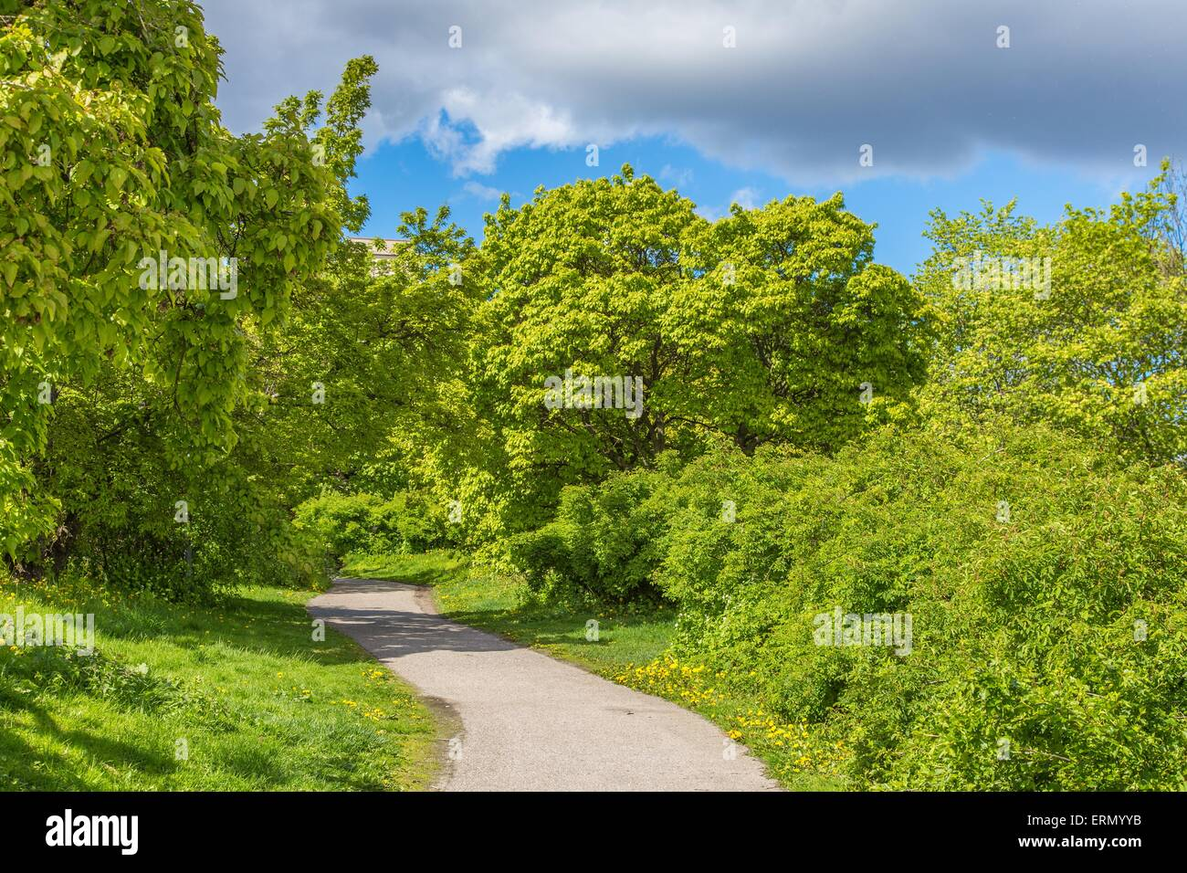 Beautiful Glade During Summertime with Green Bushes, Trees and a Cloudy Sky in Stockholm, Sweden Stock Photo