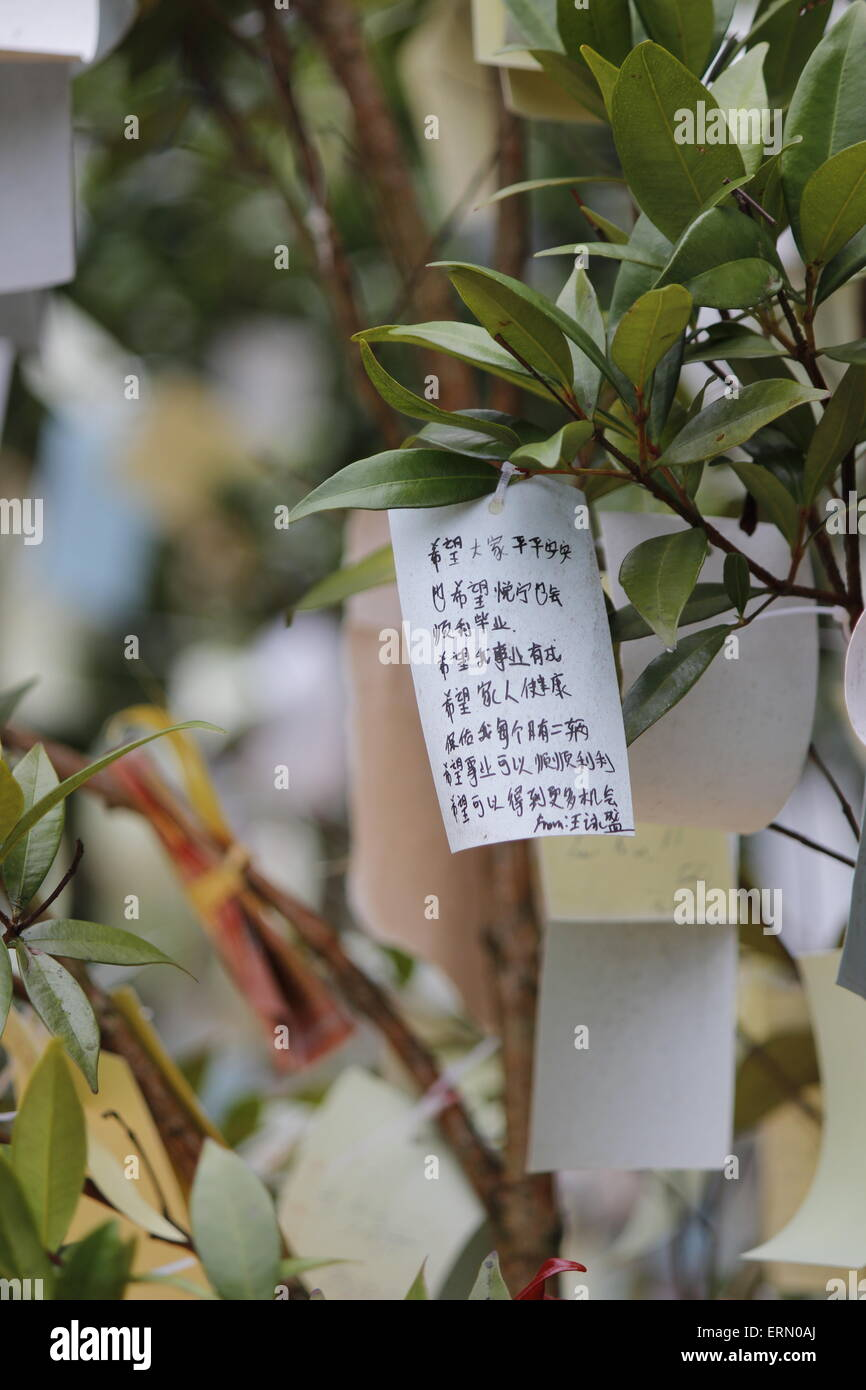 wishing paper hanging on wishing tree at Chinese temple - Stock Image